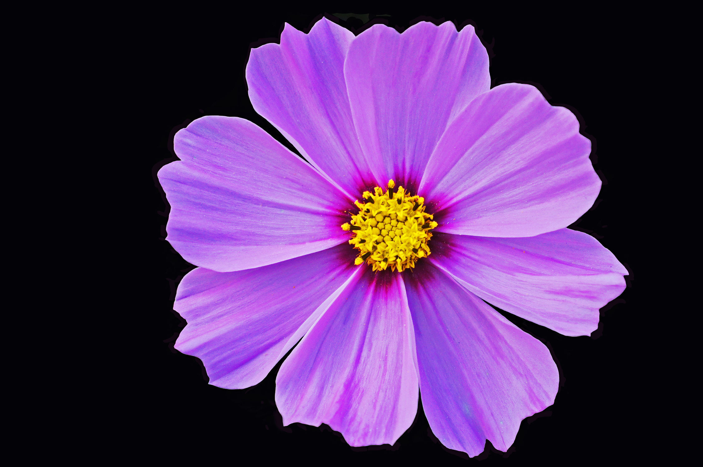 Bild mit Pflanzen, Blumen, Blume, Pflanze, Blüten, blüte