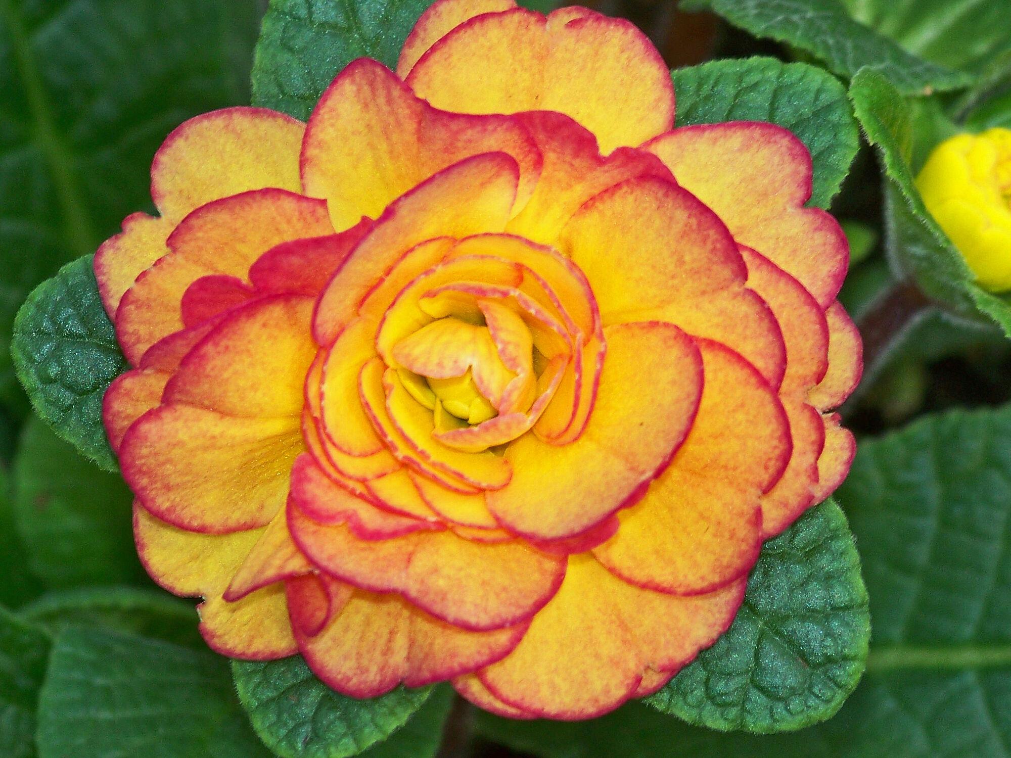 Bild mit frühlingsblumen