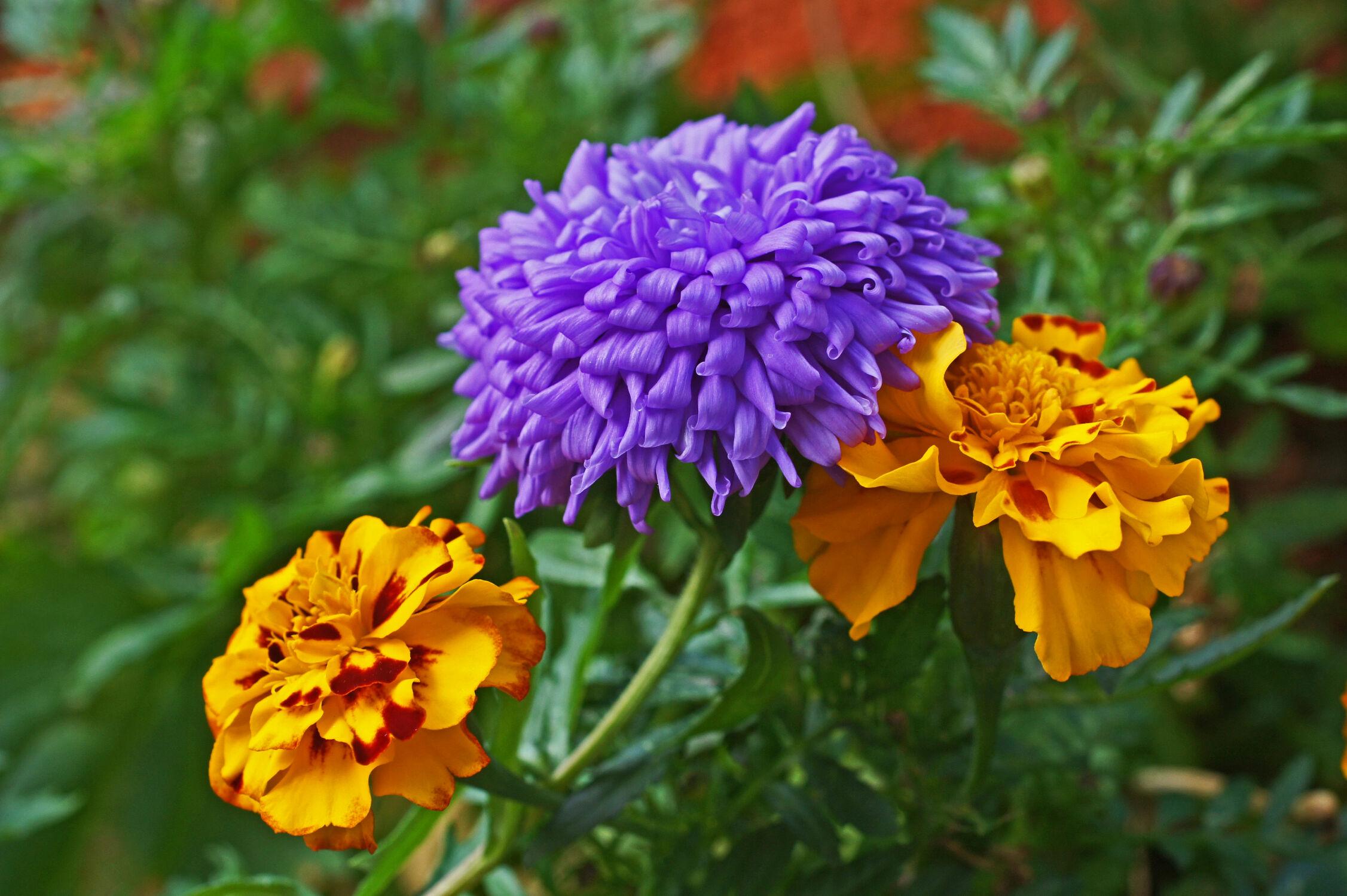 Bild mit blütenkompositionen