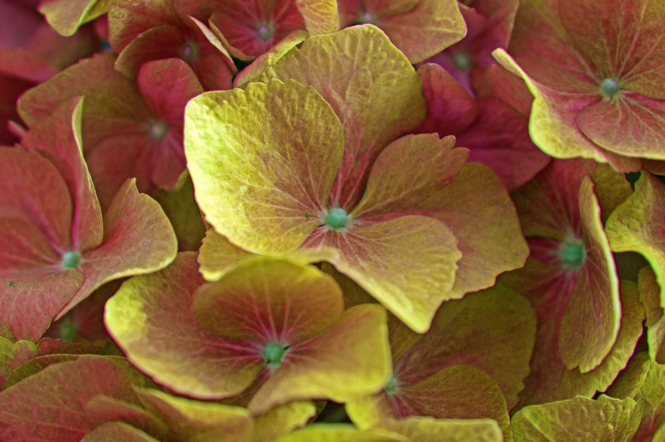 Bild mit hortensien