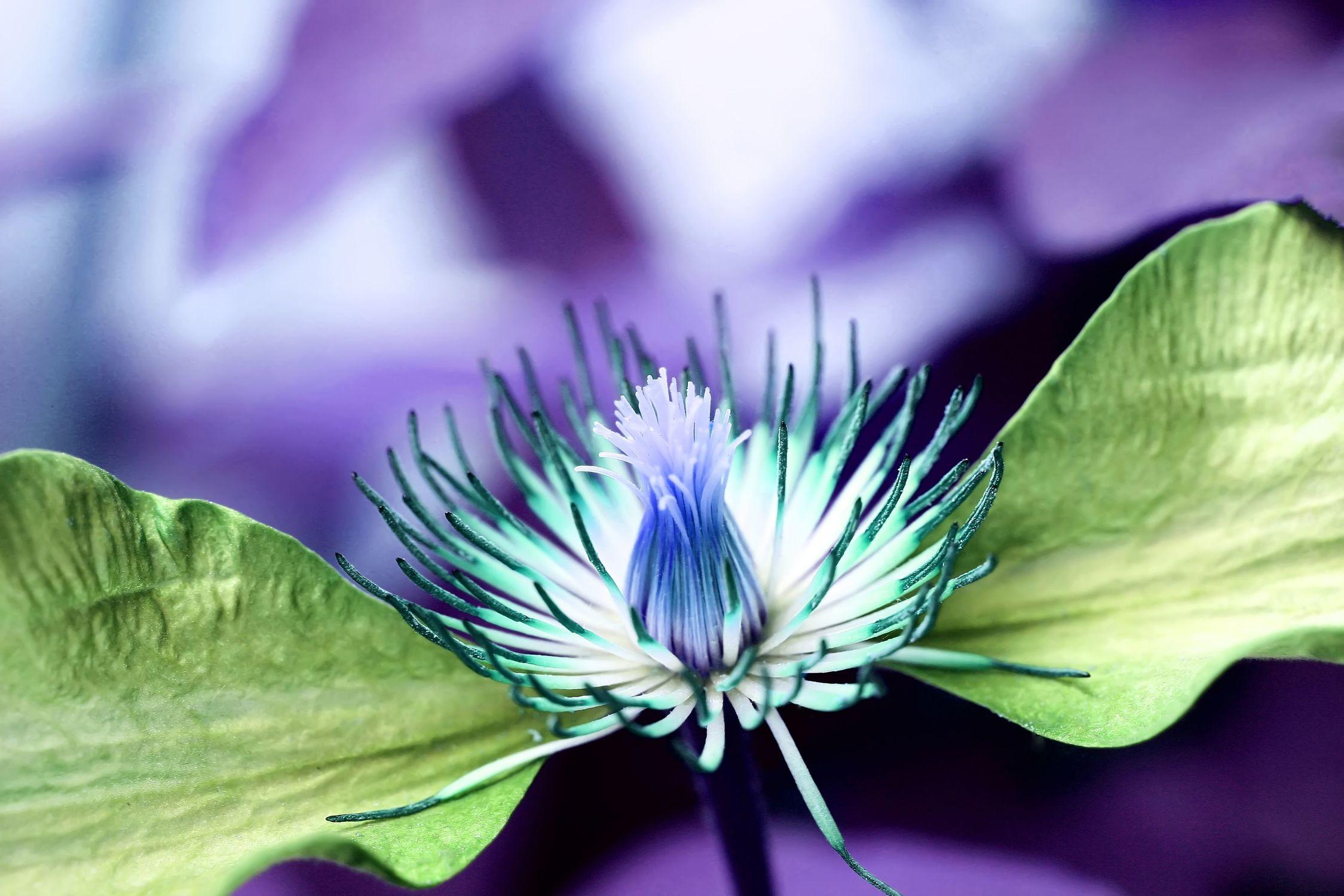 Bild mit Pflanzen, Blumen, Blume, Pflanze, verfremdete blumen, Blüten, blüte