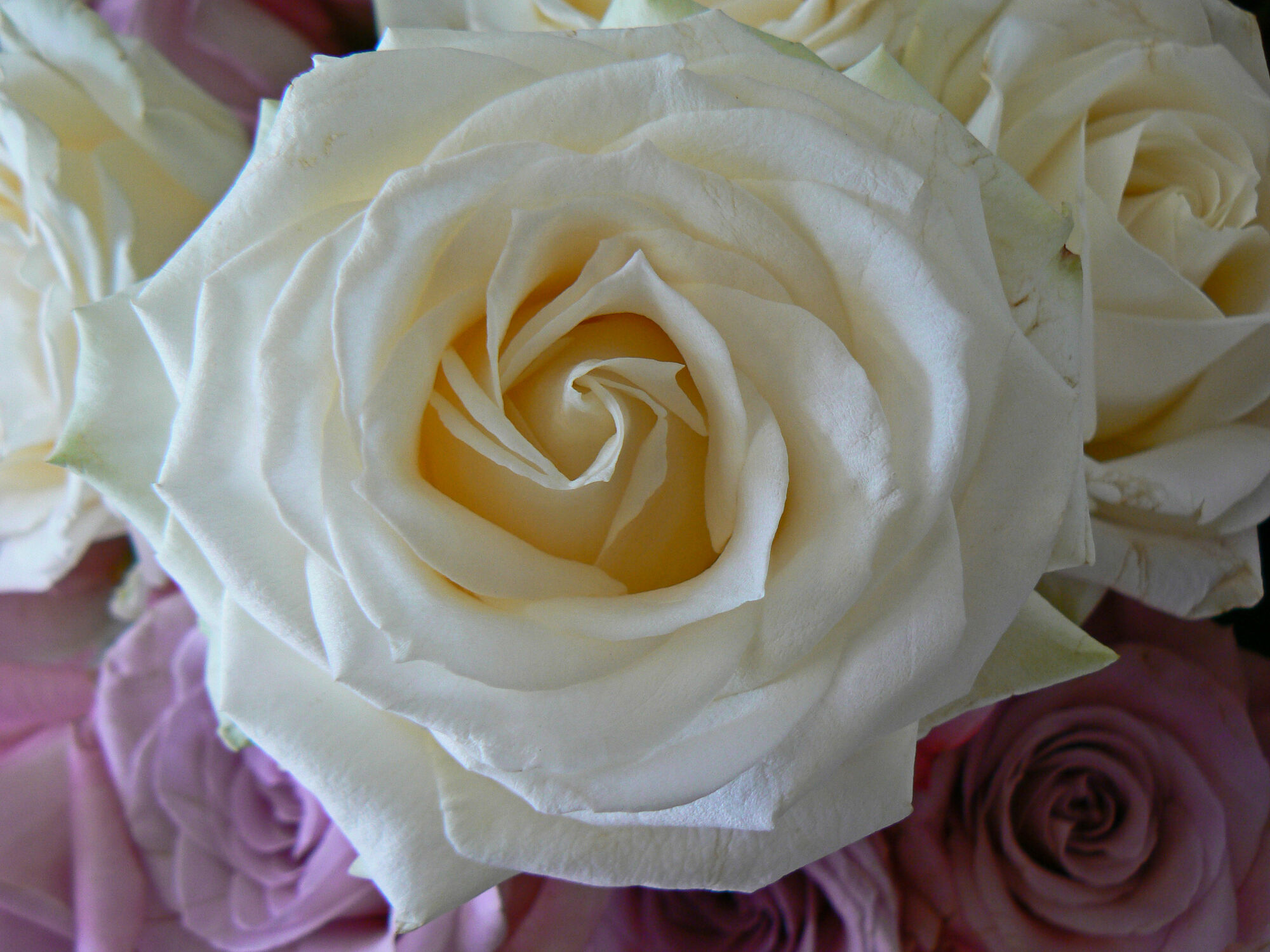 Bild mit Rosen
