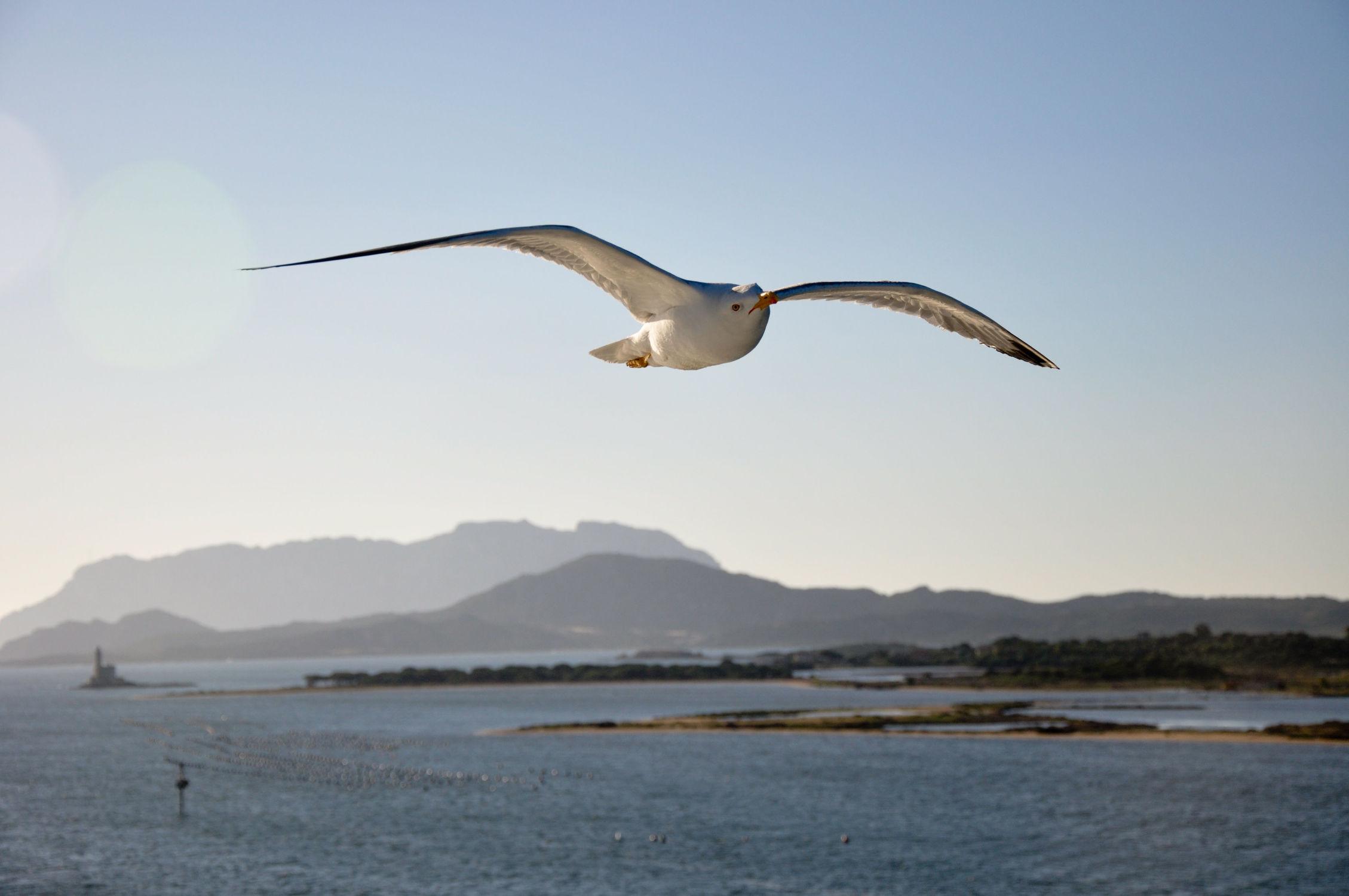 Bild mit Urlaub, Vögel, Vögel, Häfen, Möwen, Ostsee, Meer, Möwe, See, landscape, Möve, Ostseebilder, Möven