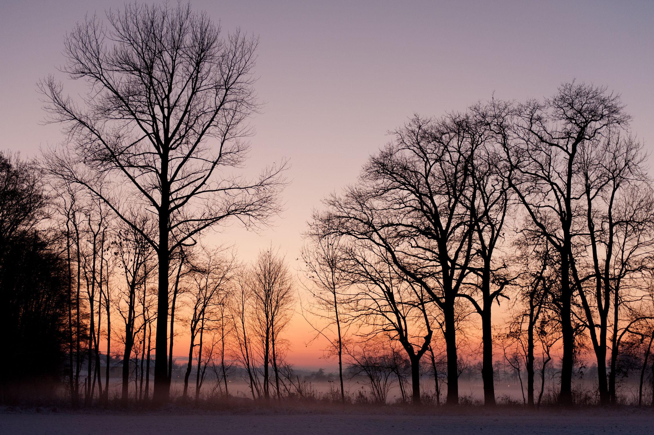 Bild mit Landschaften, Bäume, Winter, Schnee, Sonnenuntergang, Sport, Sonnenaufgang, Sonne, Wald, Baum, Landschaft, landscape, Kälte