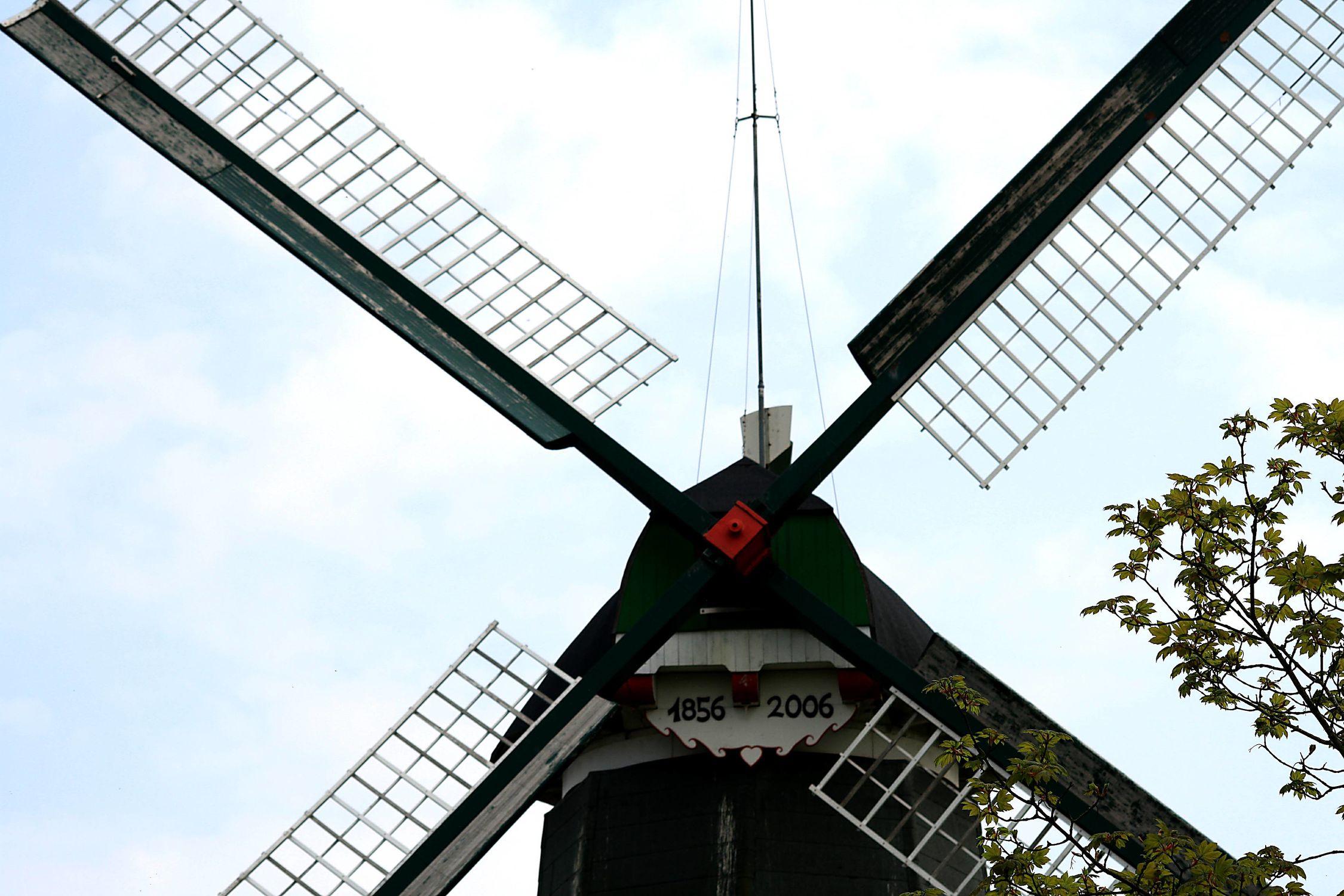 Bild mit Windmühlen
