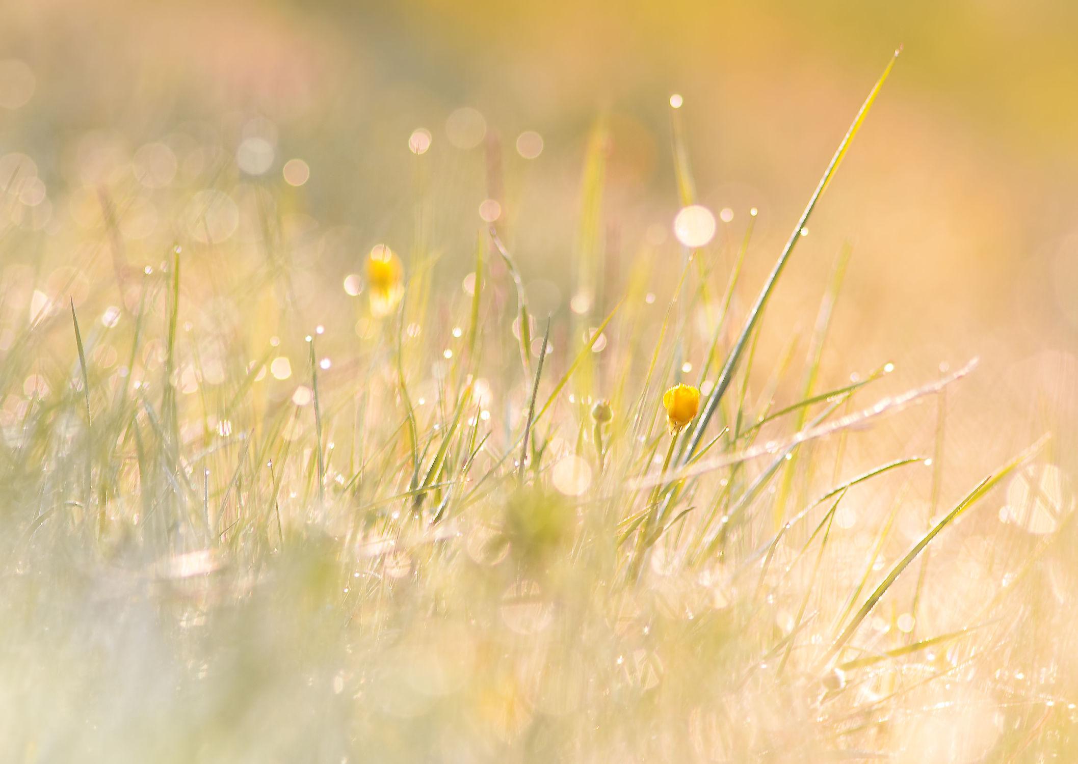 Bild mit Natur, Gräser, Sonne, Sonnenschein, Gras, Wiese, Feld, Felder, Wiesen, Weide, Weiden, Abendstimmung