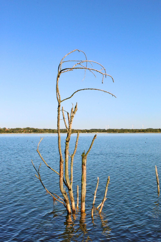 Bild mit Gewässer, Blaues Wasser, See, Berzdorfer See, Toter Baum, Seelandschaft