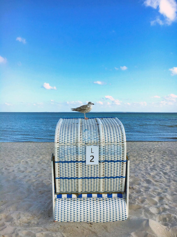 Bild mit Natur, Himmel, Strände, Horizont, Sand, Urlaub, Strand, Strandblick, Meerblick, Strandkörbe, Panorama, Lübecker Bucht, Grömitz, Meer, Strandkorb, Landschaft, Möwe, Möve, Möve auf Strandkorb, Schleswig, Holstein, Ostholstein