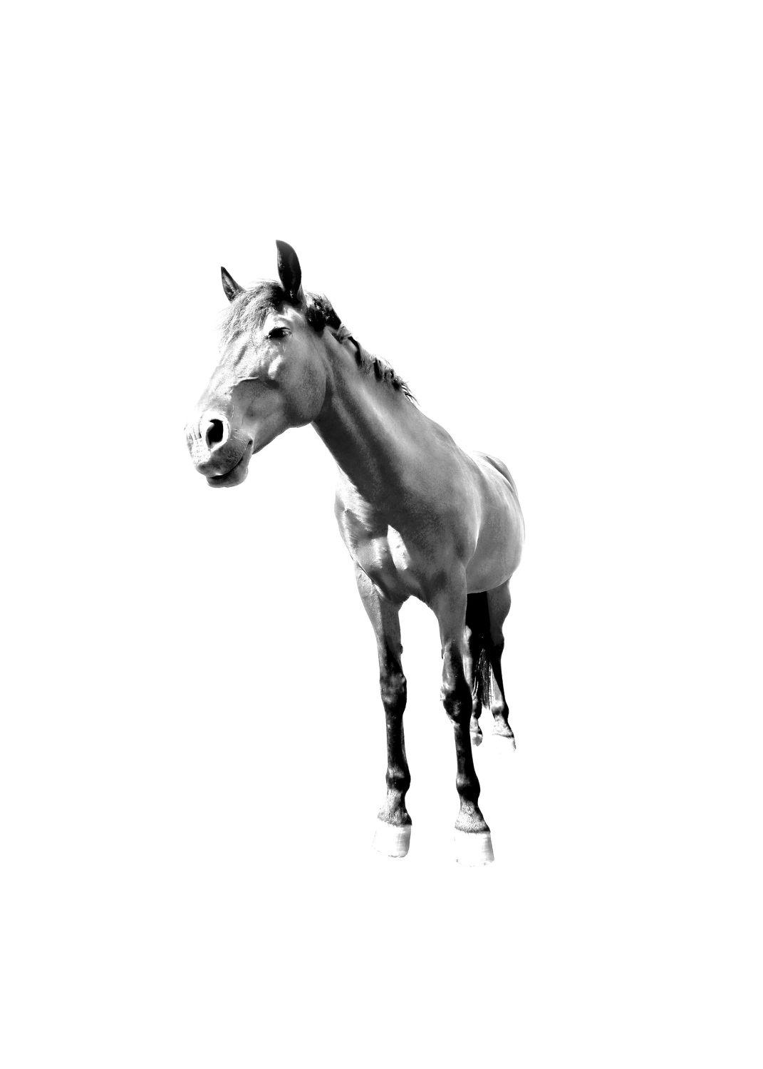 Bild mit Kunst, Tiere, Tiere, Pferde, Pferde, Tier, Tier, Kinderbild, Kinderbilder, Pferd, Pferd, Black and White, schwarz weiß, reiten, SW, Minimalismus, minimal art, Horse, Pferdeliebe, pferdebilder, pferdebild, minimalart