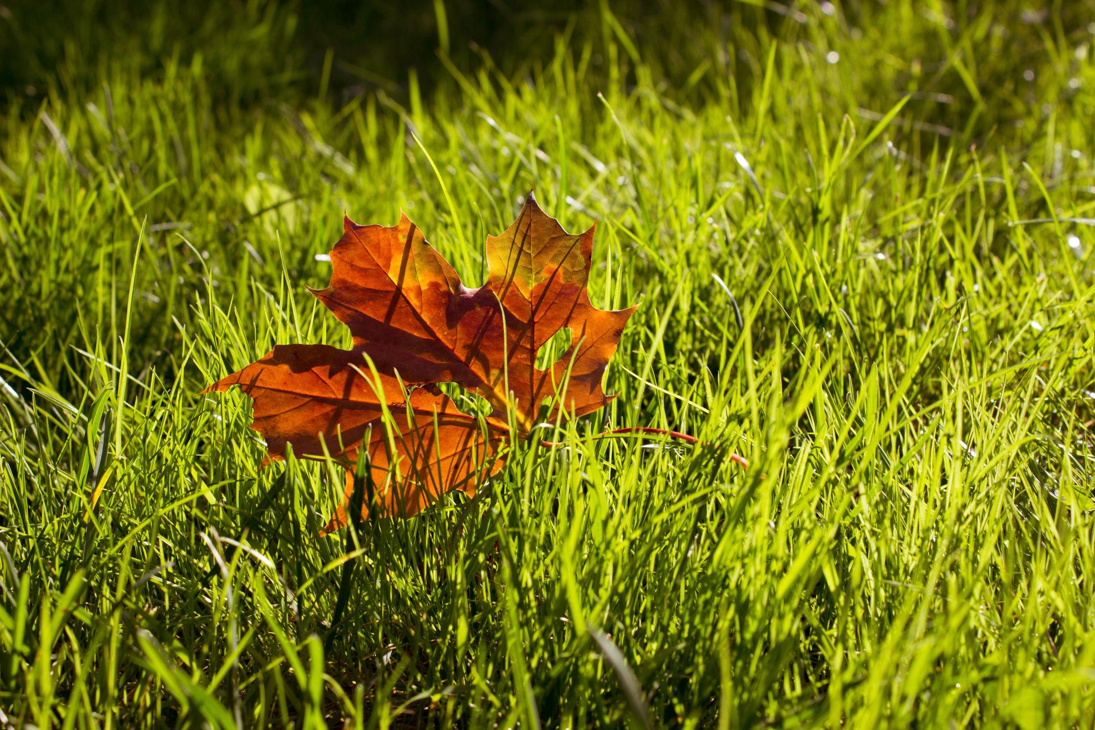 Bild mit Jahreszeiten