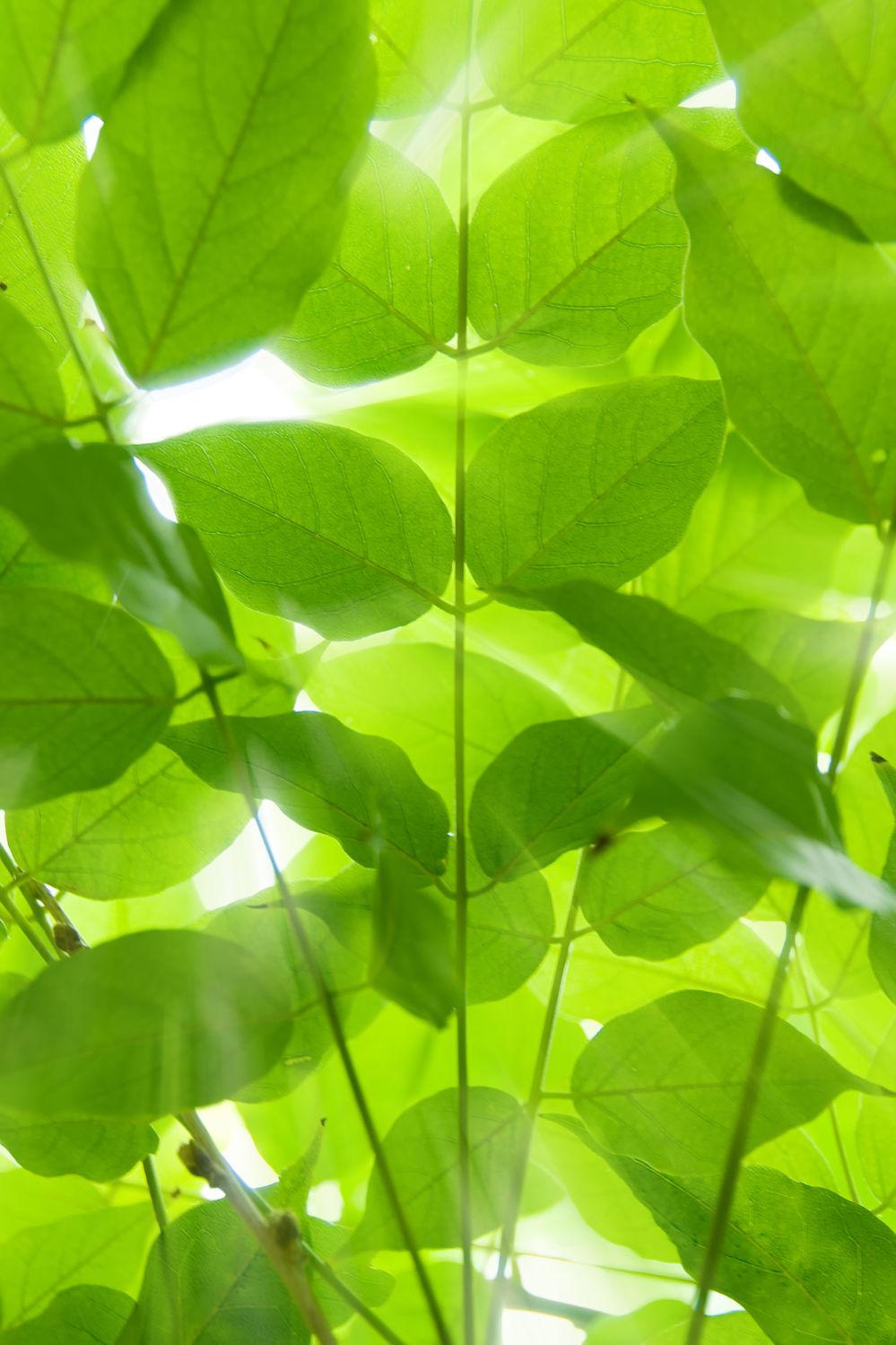 Bild mit Natur, Pflanzen, Blumen, Blätter, Pflanze, Blatt