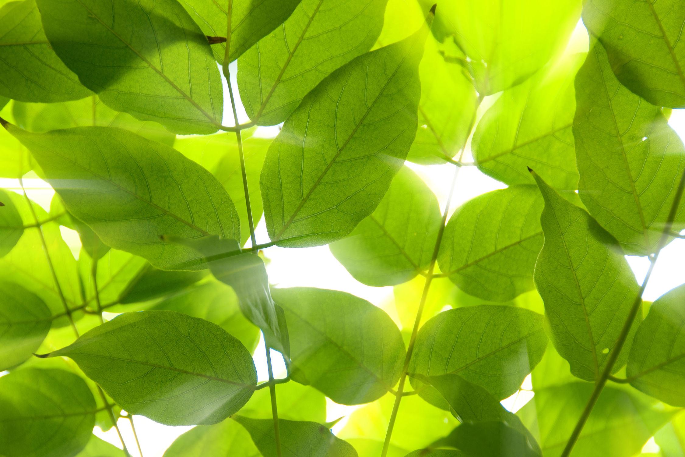 Bild mit Natur, Pflanzen, Blumen, Sommer, Blätter, Blume, Pflanze, Blatt, Blüten, blüte, Laub