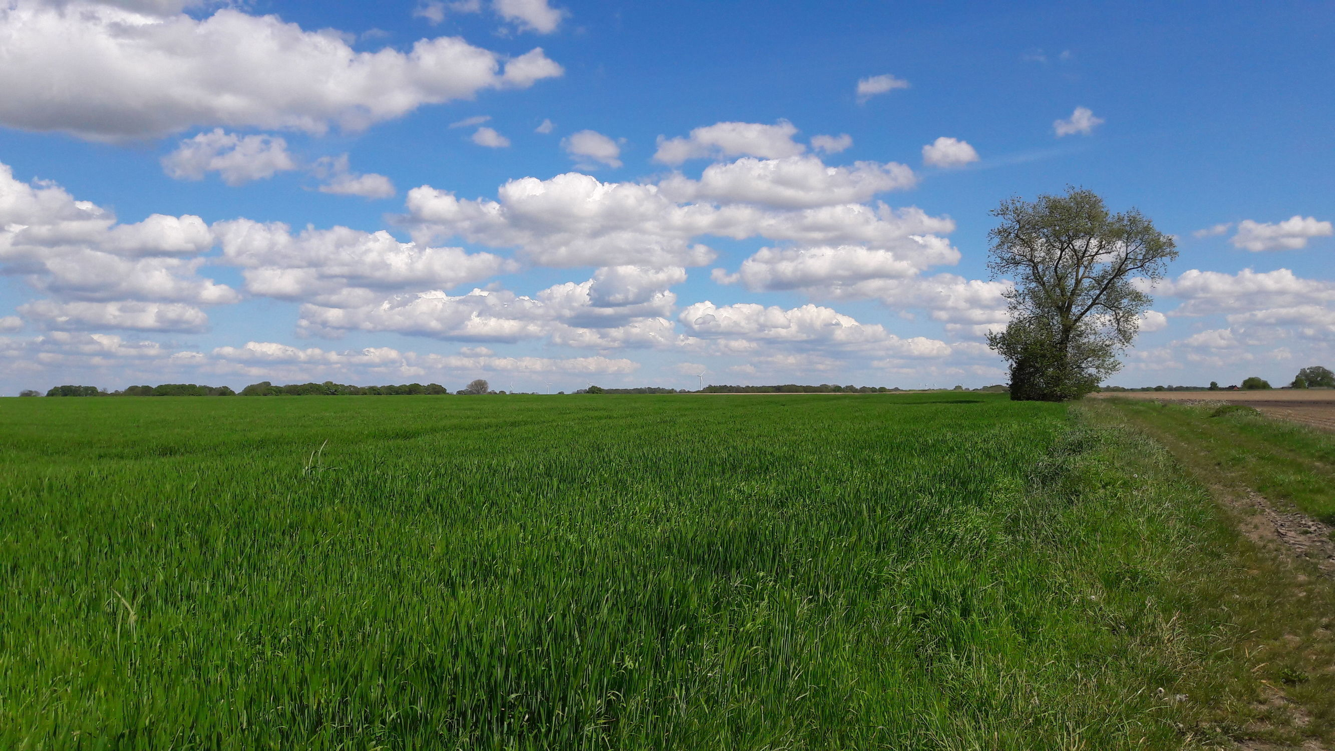Bild mit Natur, Landschaften, Himmel, Wolken am Himmel, Blauer Himmel, Feld, Felder, Felder & Wiesen, Landschaften & Natur, Natur und Landschaft, Fotografien Landschaften/Wälder, Fotografien