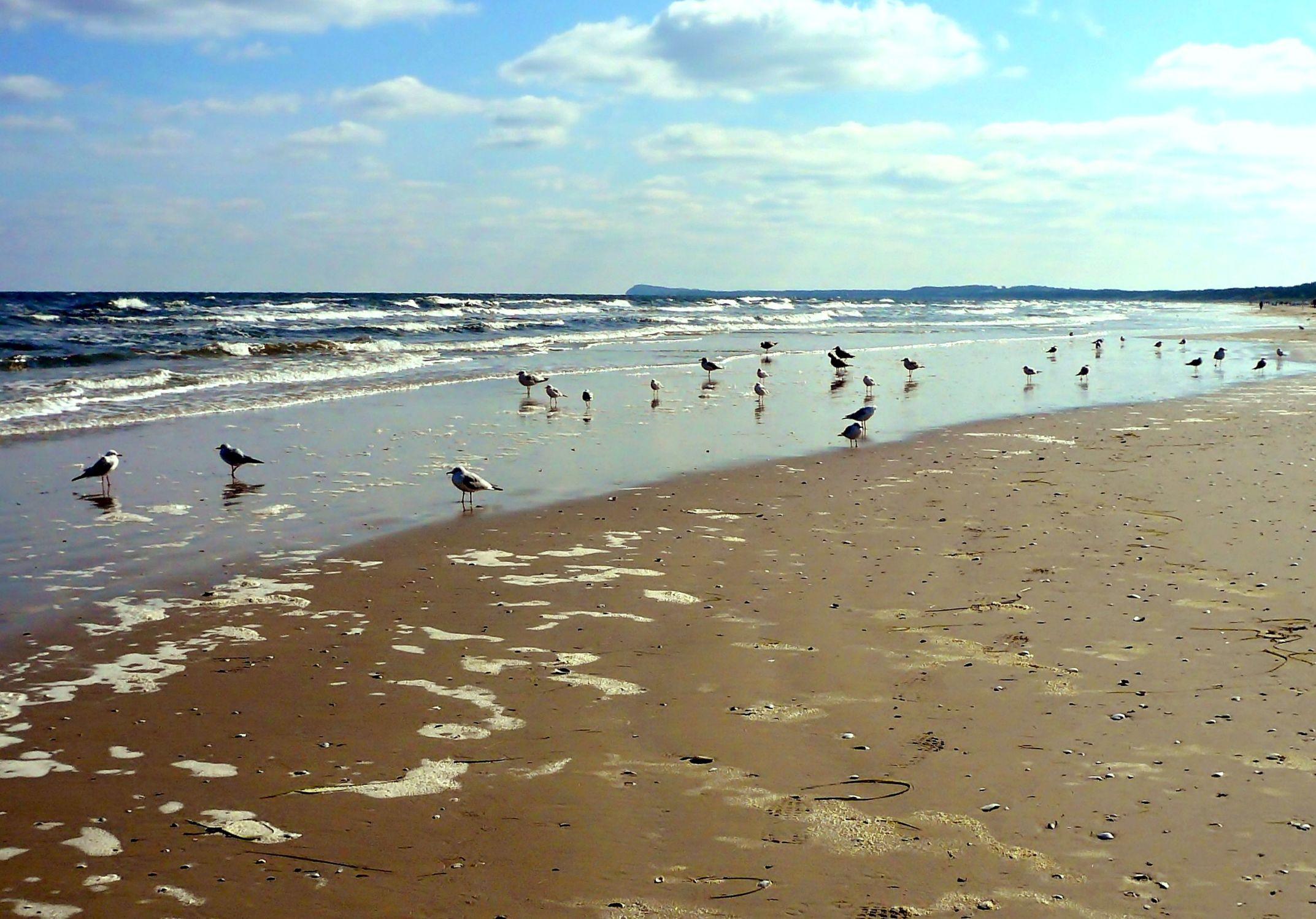 Bild mit Natur, Wasser, Wellen, Sand, Möwen, Strand, Ostsee, Meer, Insel, Usedom, Usedom