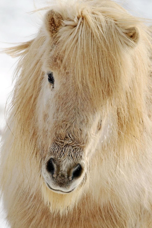 Bild mit Tiere, Tiere, Säugetiere, Natur, Pferde, Pferde, Tier, Tier, Kinderbild, Kinderbilder, Kinderzimmer, Pferd, Pferd, Tierfotografie, Animal, Wildlife, Umwelt, reiten, Tierbild, Tierbilder, Tierfoto, Pferdeliebe, pferdebilder, pferdebild