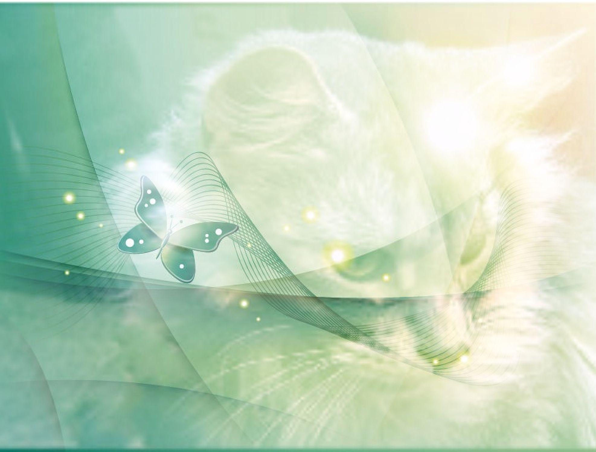 Bild mit Katzenartige, Katzen, Katze, Katzenbilder, Bildercollagen, Stillleben & Collagen, Collagen, Collage, Tier Collagen, Digitale Tiere