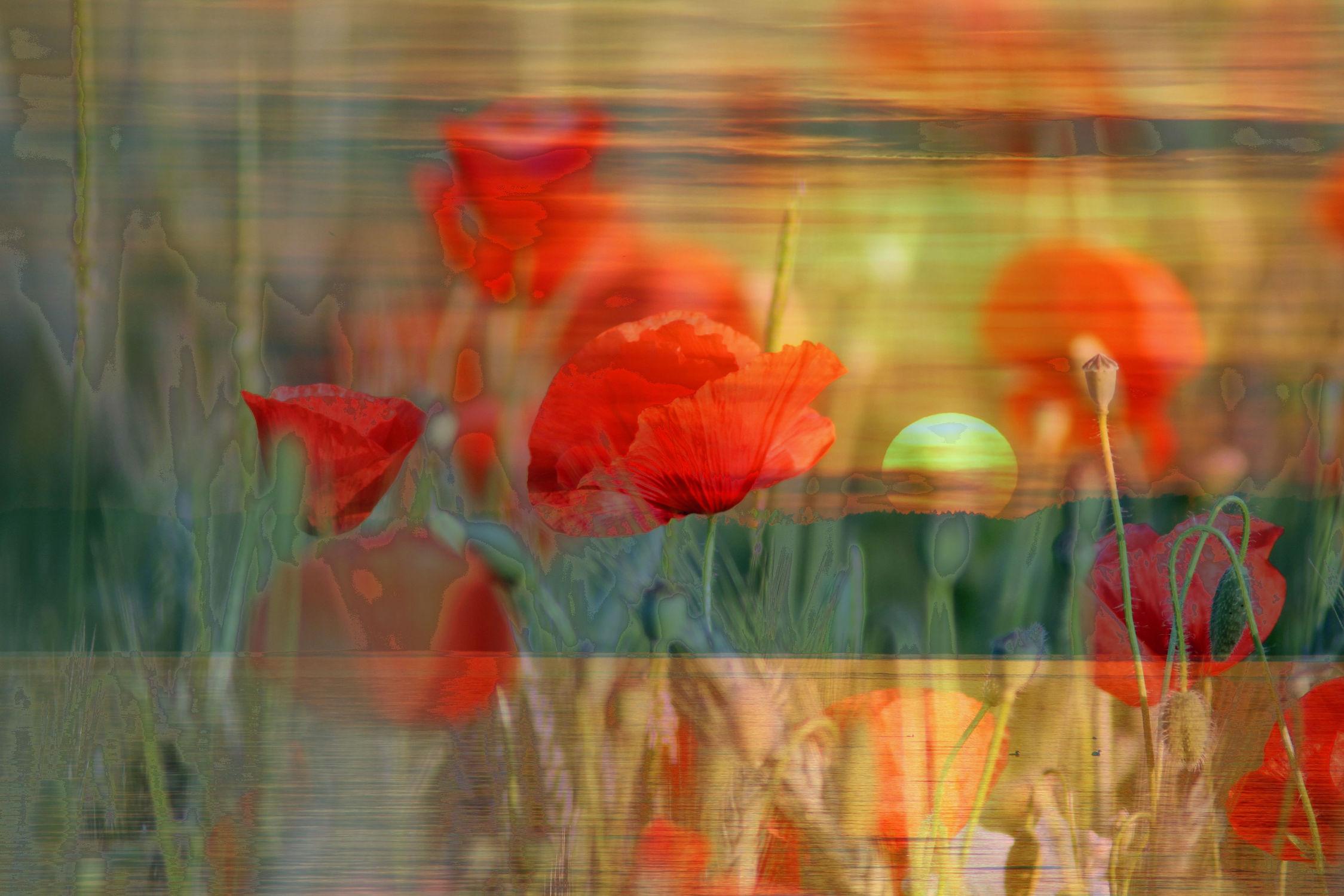 Bild mit Gewässer, Blumen, Sonnenaufgang, Mohn, Meer, Blume, See, Sonnenuntergänge, Am Meer, Mohnblumen