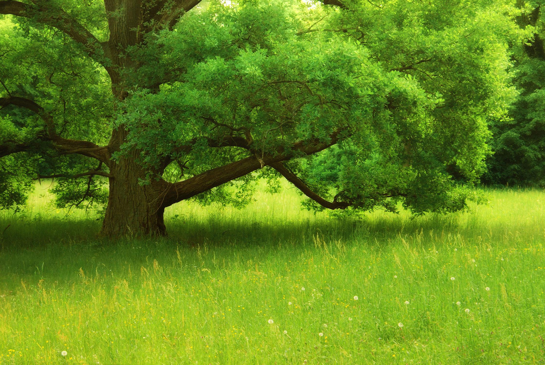 Bild mit Natur, Natur, Grün, Landschaften, Bäume, Frühling, Baum, Landschaft, Gras, grass
