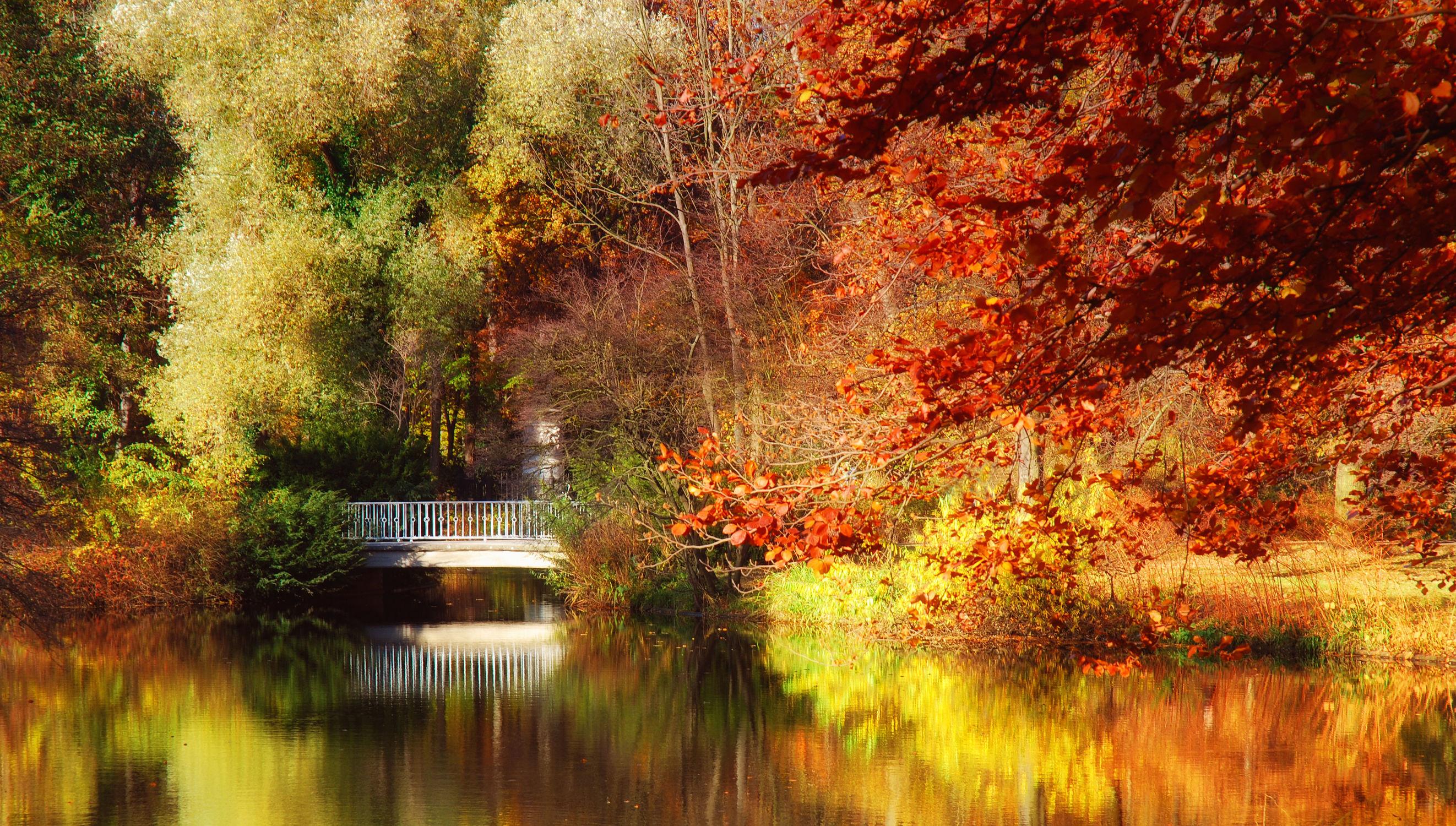 Bild mit Natur, Natur, Wasser, Landschaften, Bäume, Jahreszeiten, Herbst, Baum, Berlin, Blätter, Blatt, See, Brücke, Park, Teich, Parkanlage, Laub, tiergarten