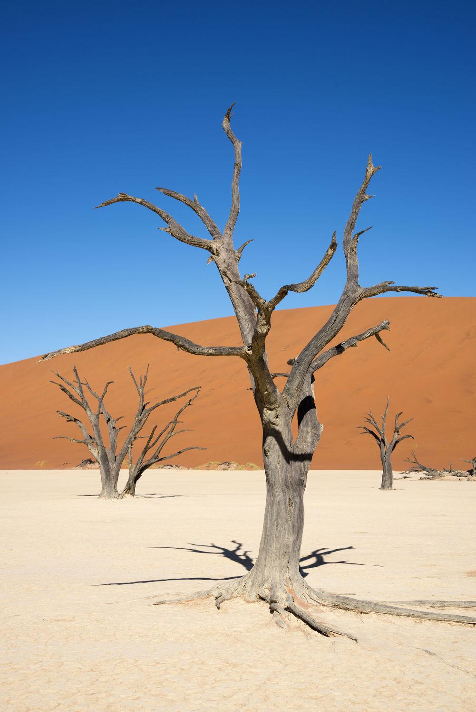 Bild mit Wüste