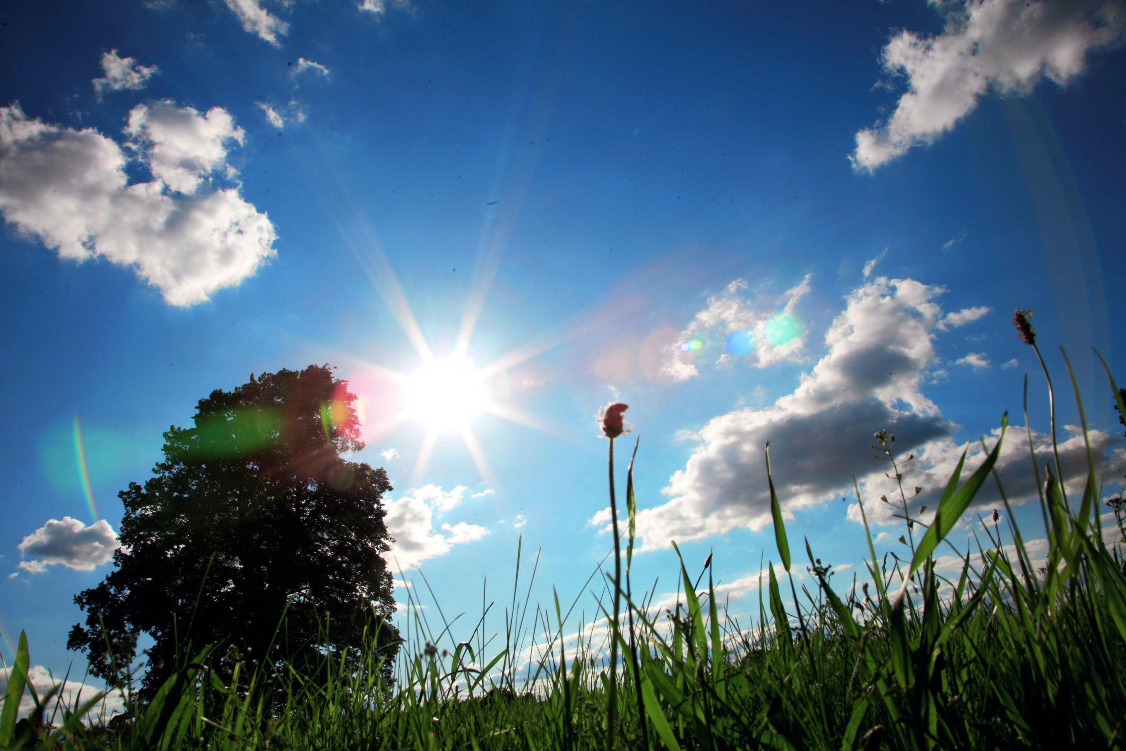 Bild mit Natur, Gräser, Sonnenuntergang, Sonnenaufgang, Sonne, Sonnenschein, Gras, Wiese, Wiesen, sun, sunshine