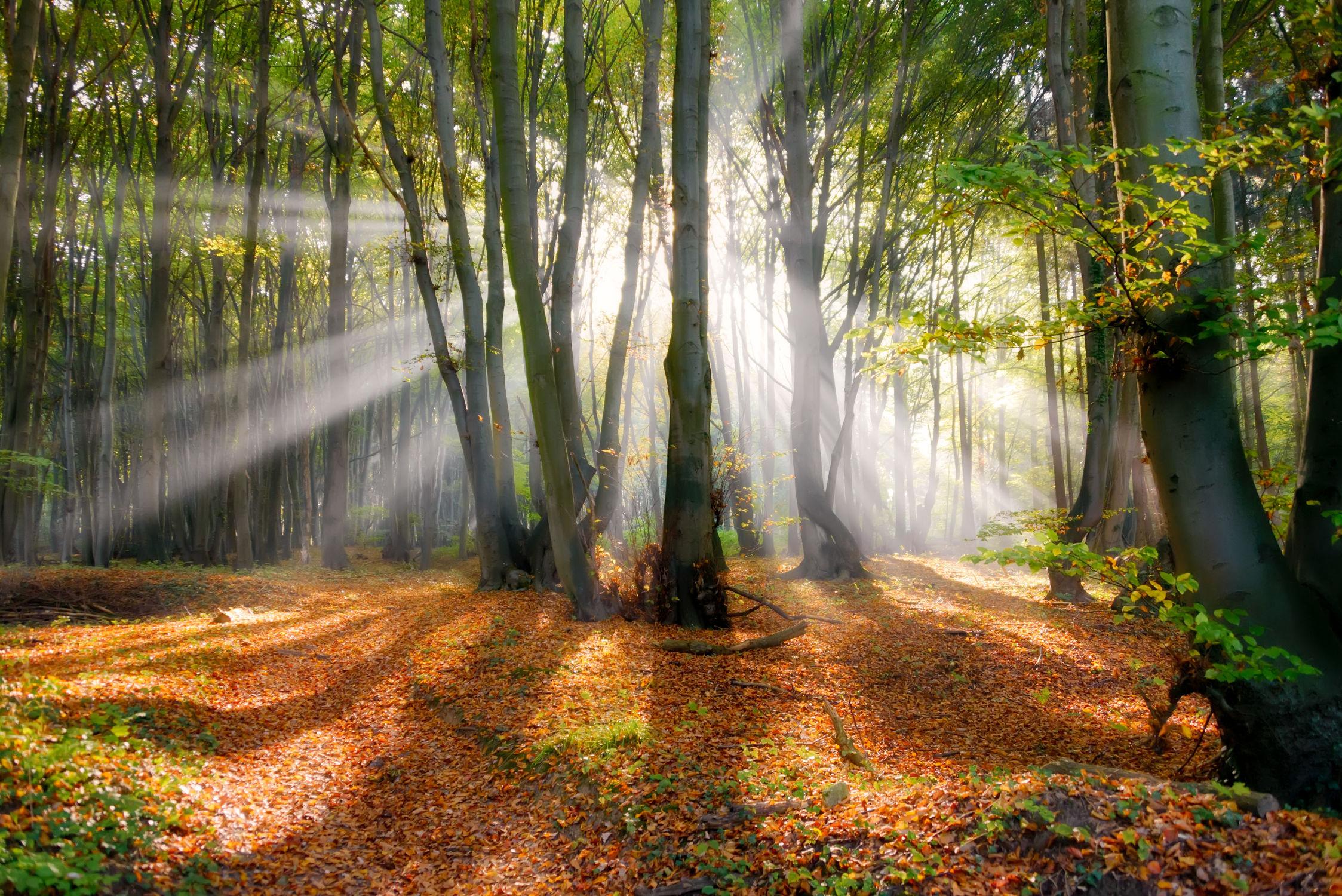Bild mit Natur, Landschaften, Bäume, Jahreszeiten, Wälder, Herbst, Sonne, Wald, Märchenwald, Blick in den Wald, Waldbild, Nature, Gegenlicht, Licht, Laubwald, Ruhe, Buchenwald, Natur und Landschaft, Landschaften im Herbst, Landschaft und Natur, Im Wald, Fotografien, Erholung, Sonnenstrahlen, Sonnenlicht, Naturfotografie, Entspannen, Ausspannen, Herbststimmung, herbstlich, Herbstwald, Strahlen, Jahreszeit, autumn, Landschaften/Wälder, Bäume und Wälder