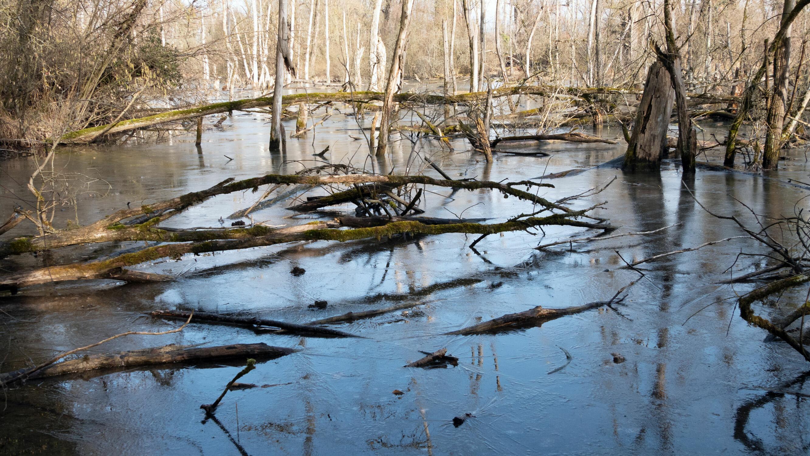 Bild mit Bäume, Eis, Reflexion, Tageslicht, Baumstämme, See, Landschaft und Natur, Naturschutzgebiet, eingefroren, Geisterwald