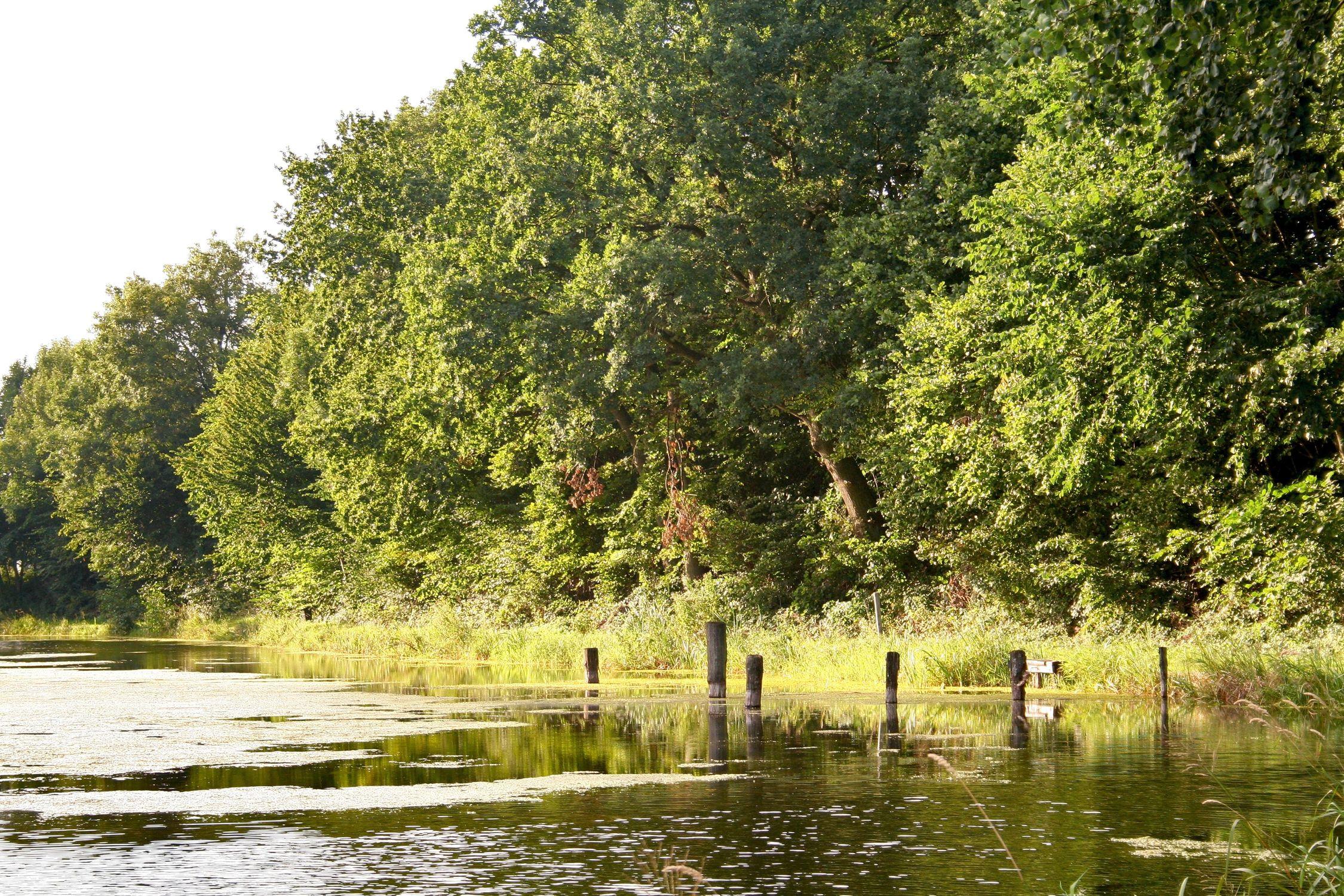 Bild mit Natur, Elemente, Wasser, Grün, Pflanzen, Gräser, Landschaften, Bäume, Gewässer, Küsten und Ufer, Wälder, Seen, Flüsse, Teiche