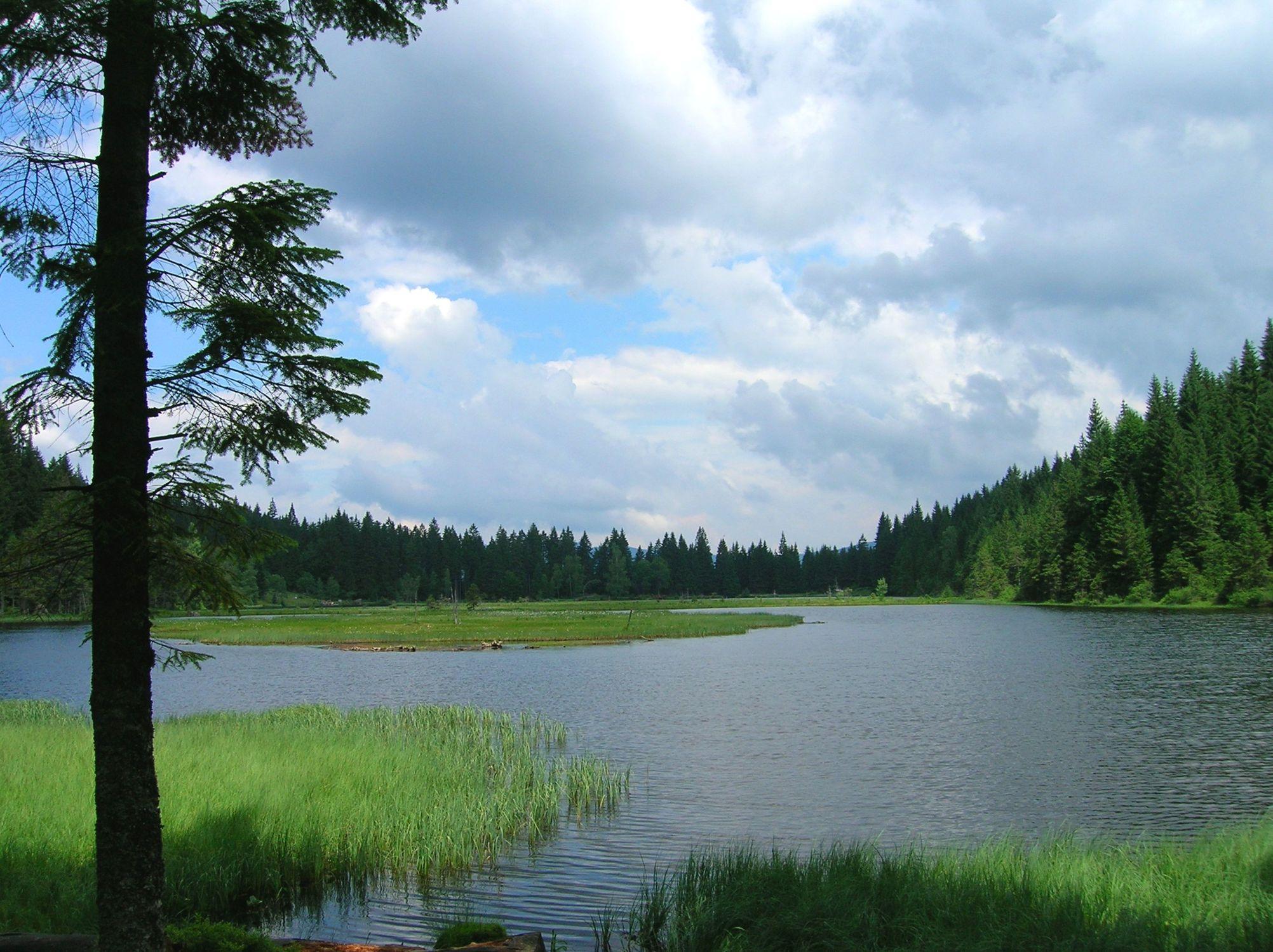 Bild mit Natur, Wasser, Grün, Gräser, Bäume, Gewässer, Küsten und Ufer, Seen, Flüsse, Teiche, Stauseen, Bergsee, See
