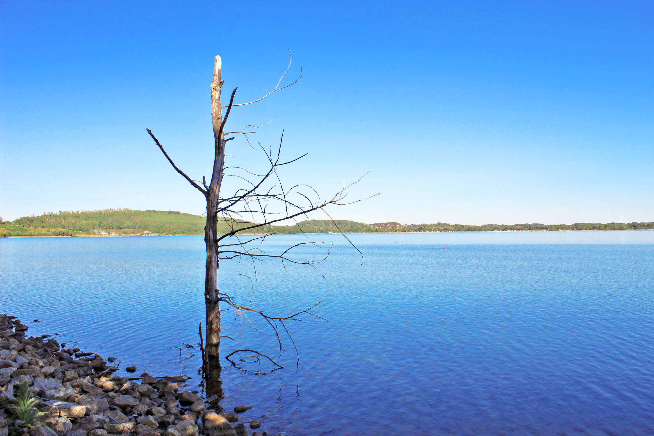 Bild mit Gewässer, Horizont, Seeblick, See, Berzdorfer See, Görlitzer See, Toter Baum, Seelandschaft