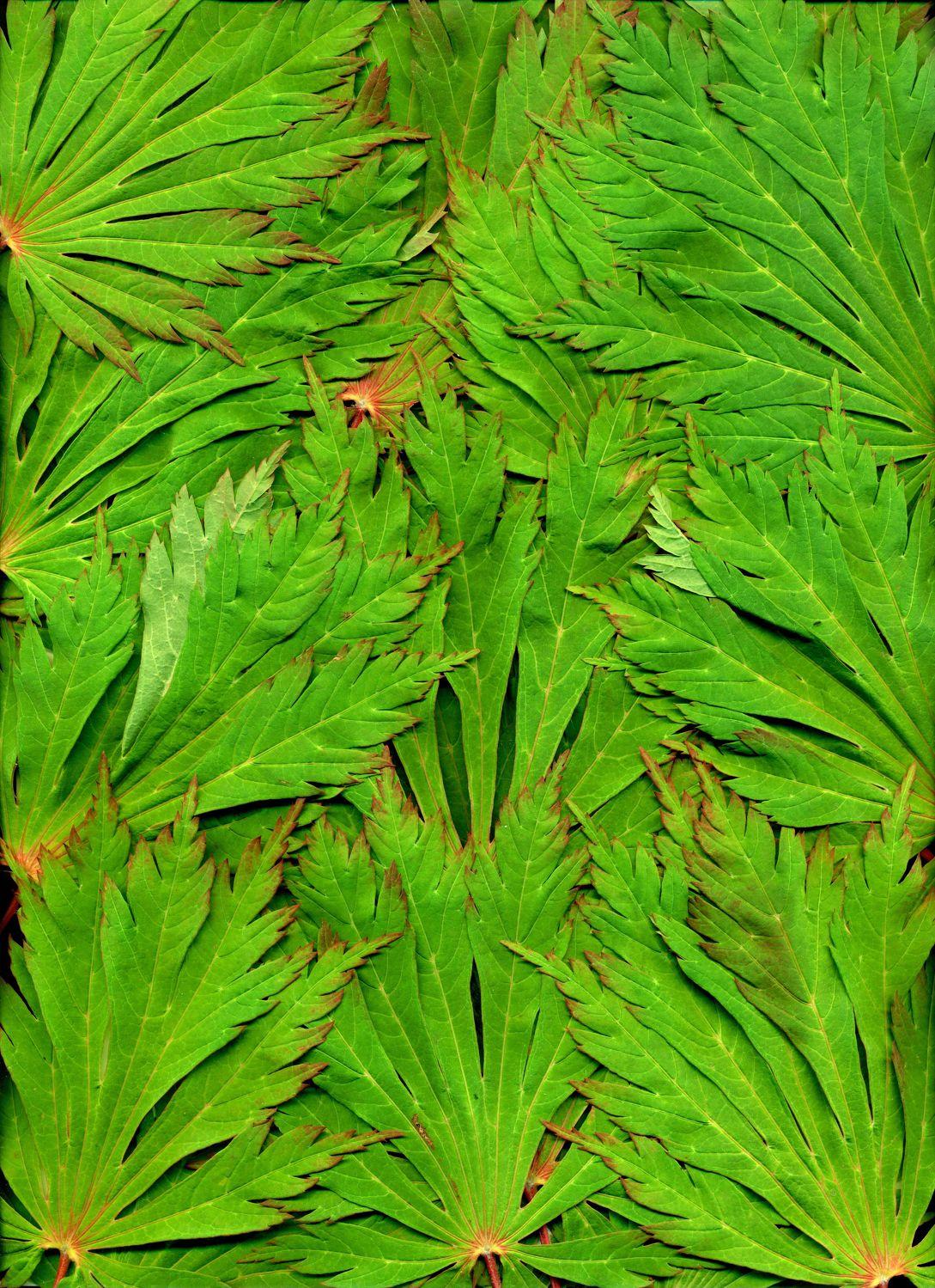 Bild mit Farben, Natur, Grün, Pflanzen, Blumen, Blätter