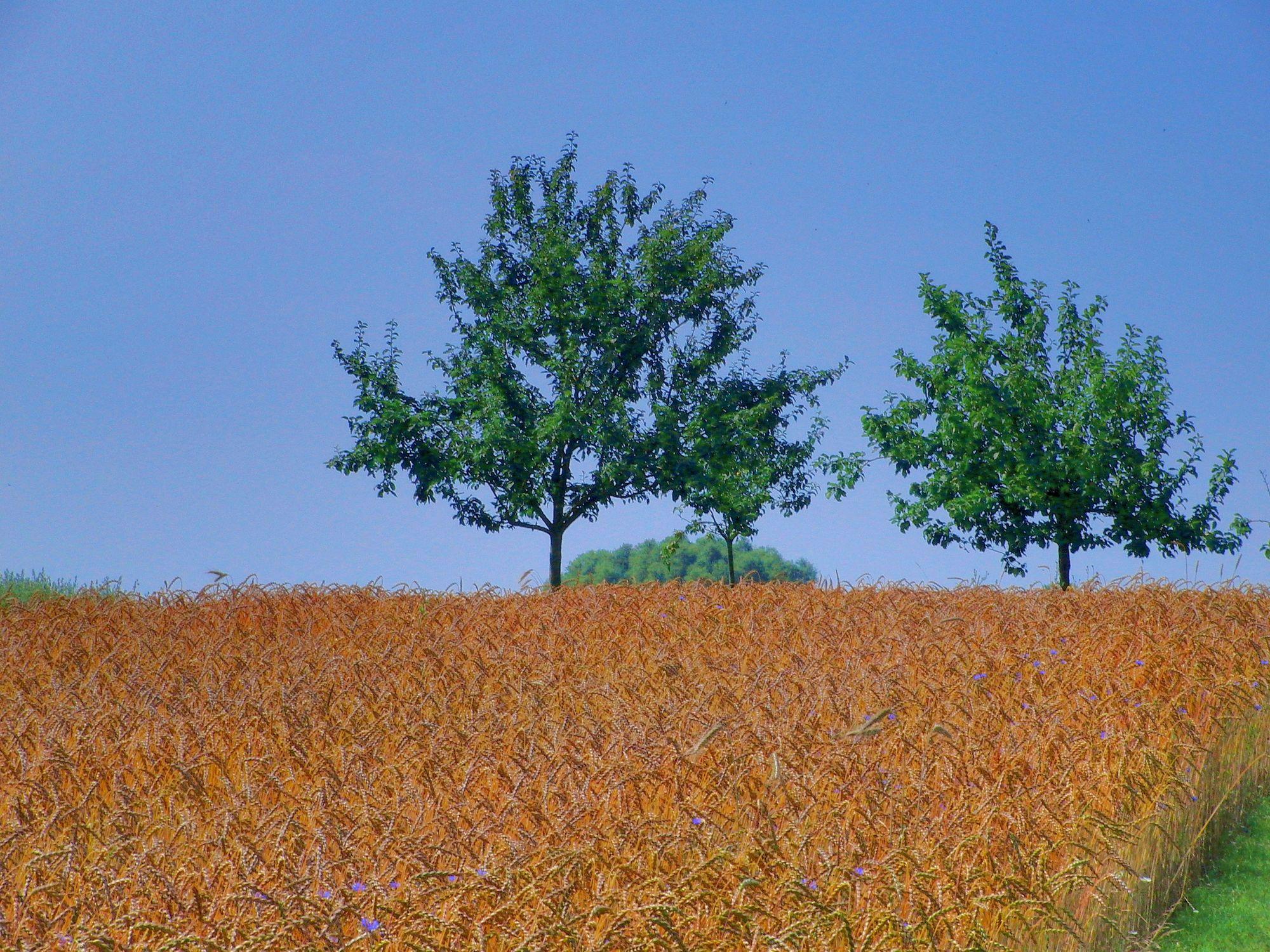 Bild mit Natur, Pflanzen, Gräser, Landschaften, Himmel, Bäume, Weiden und Wiesen, Architektur, Bauwerke, Gebäude, Bauernhöfe, Buschland