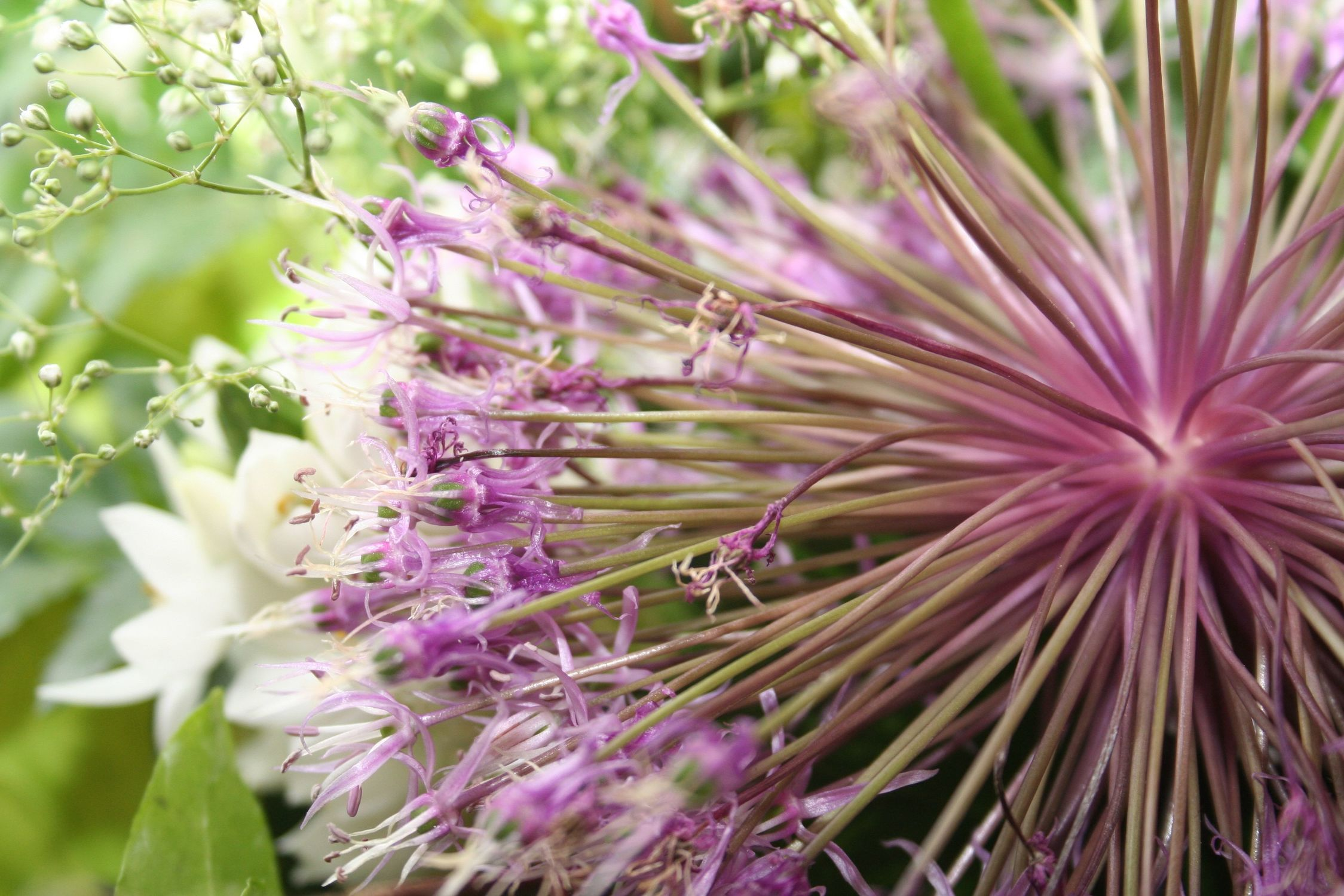 Bild mit Natur, Pflanzen, Blumen, Korbblütler, Disteln, Blume, Pflanze