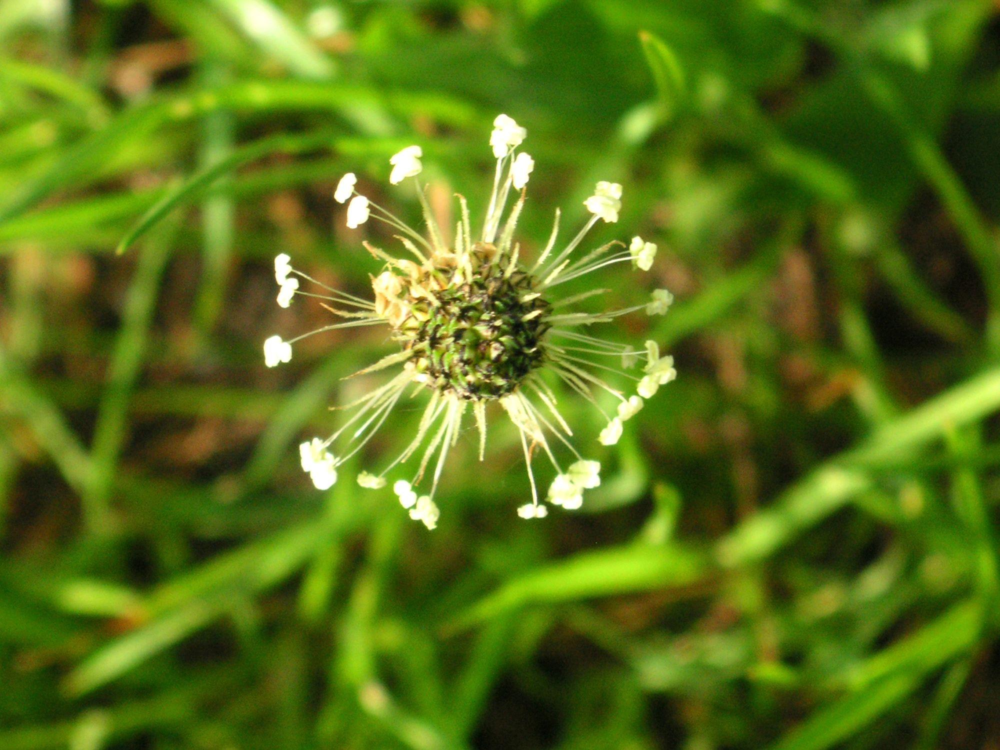 Bild mit Natur, Pflanzen, Pflanzen, Gräser, Blumen, Blume