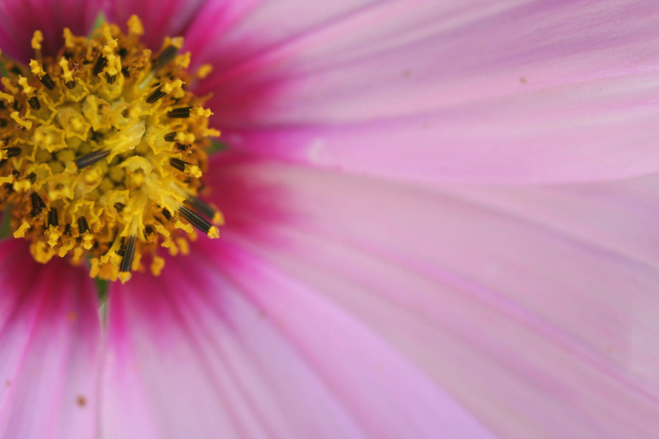 Bild mit Farben, Gelb, Natur, Pflanzen, Blumen, Rosa, Lila, Violett, Korbblütler