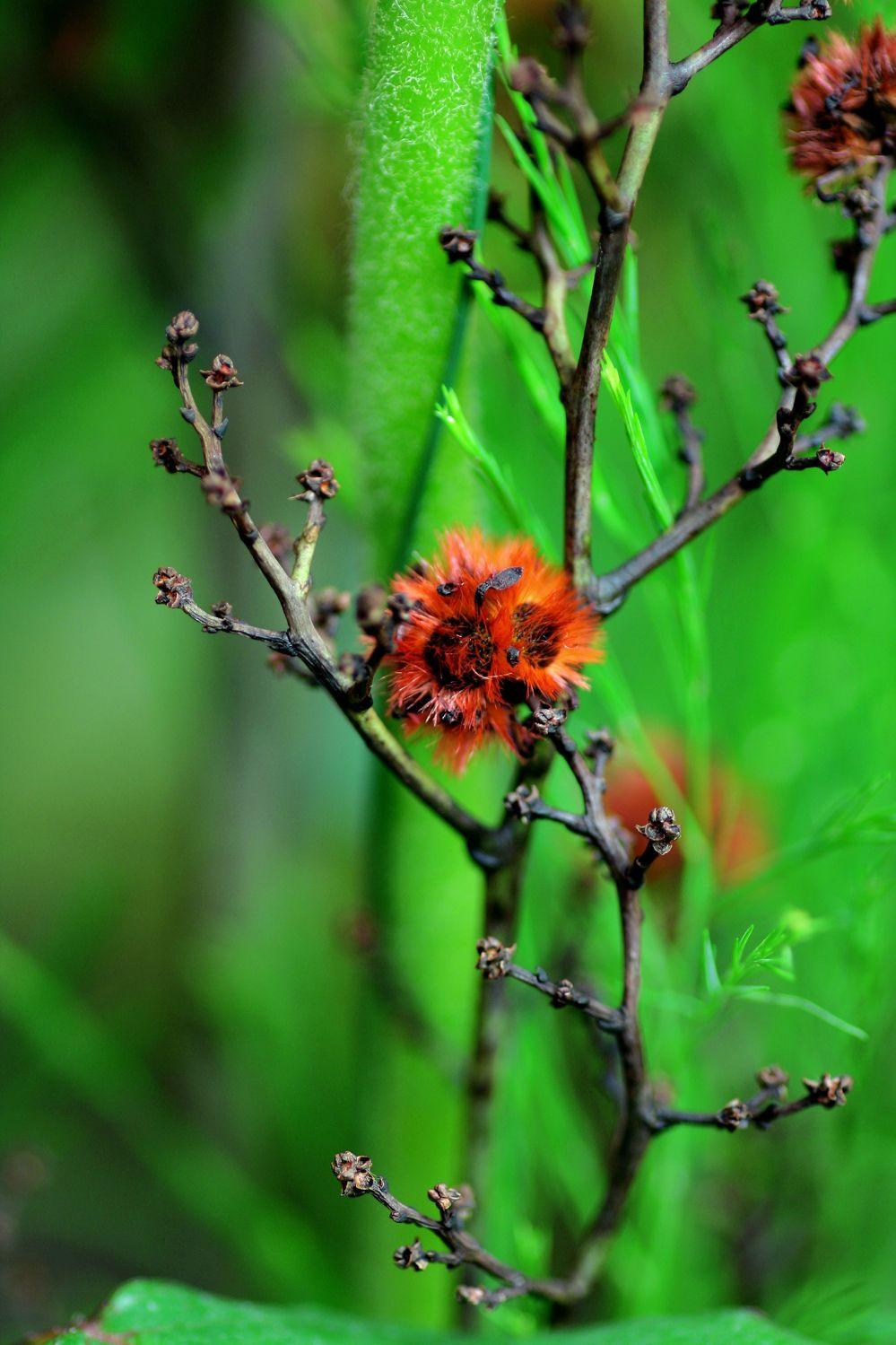Bild mit Farben, Natur, Grün, Pflanzen, Blumen, Sträucher, Pflanze, Strauch