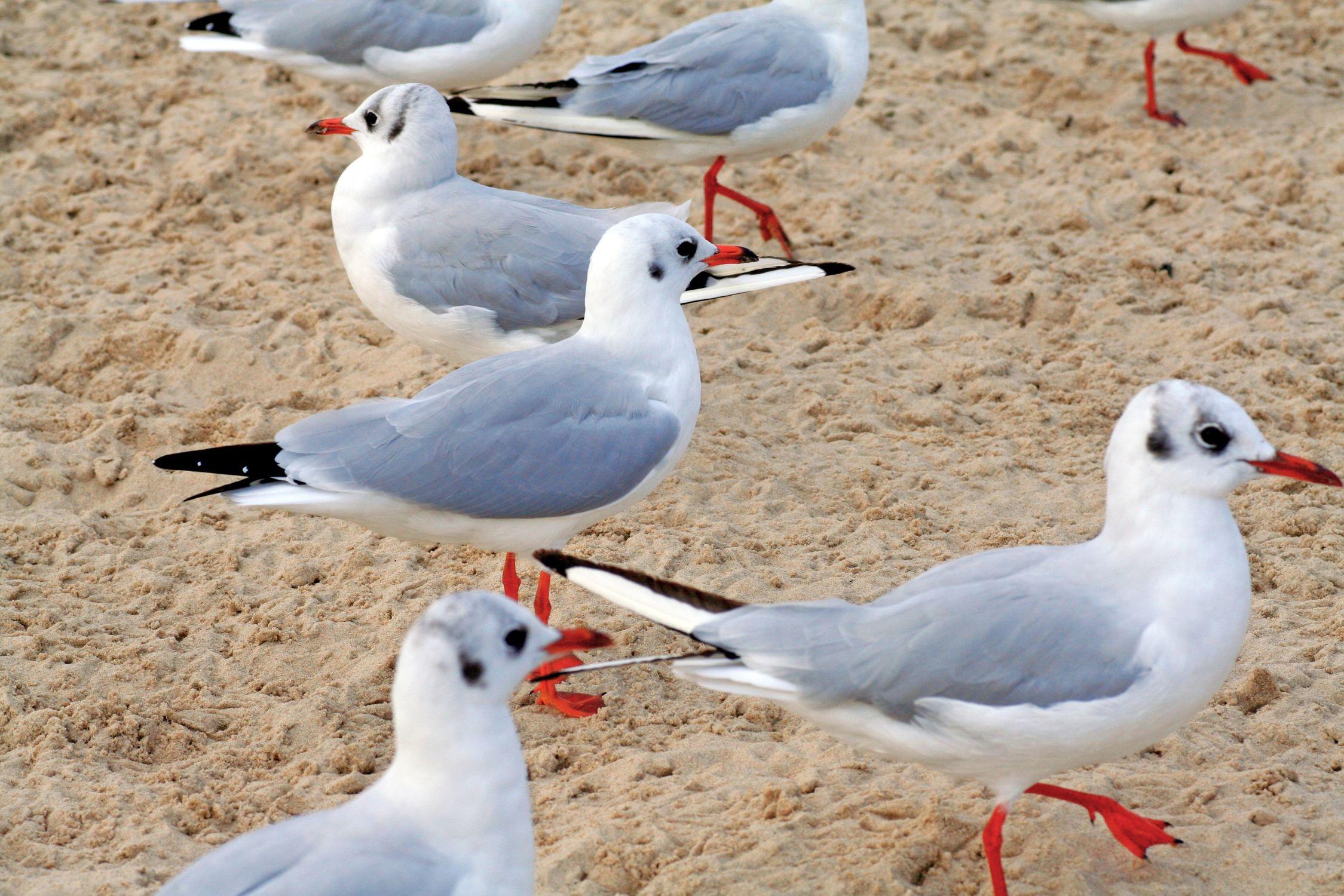 Bild mit Tiere, Vögel, Wasservögel, Möwen