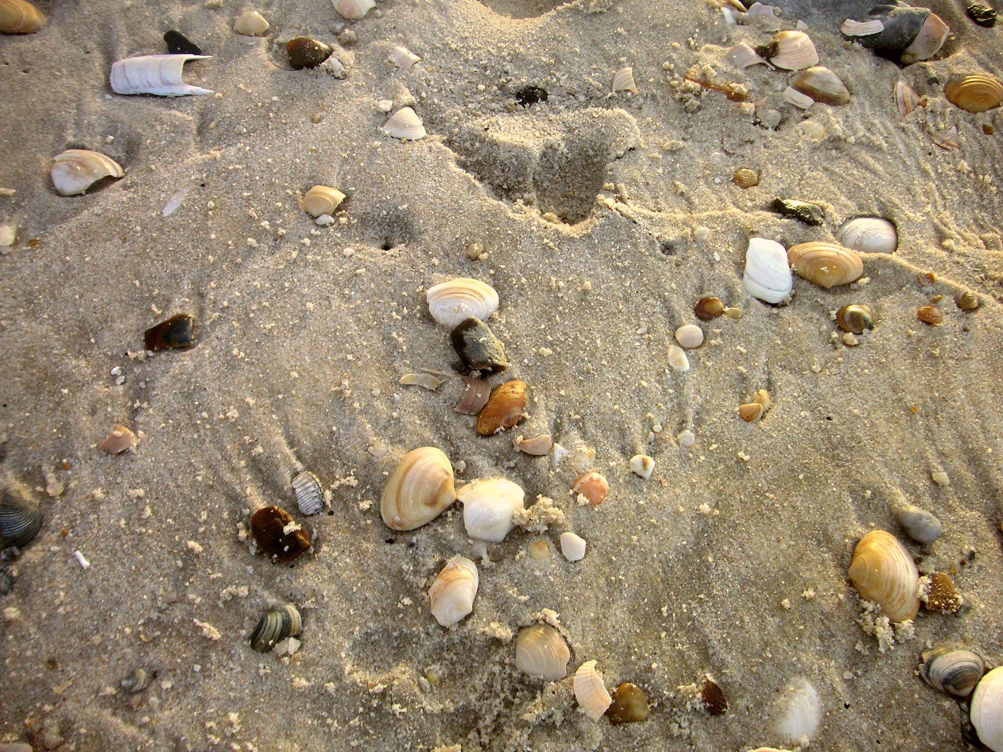 Bild mit Gegenstände, Natur, Landschaften, Felsen, Materialien, Stein, Sand, Strand, Muscheln