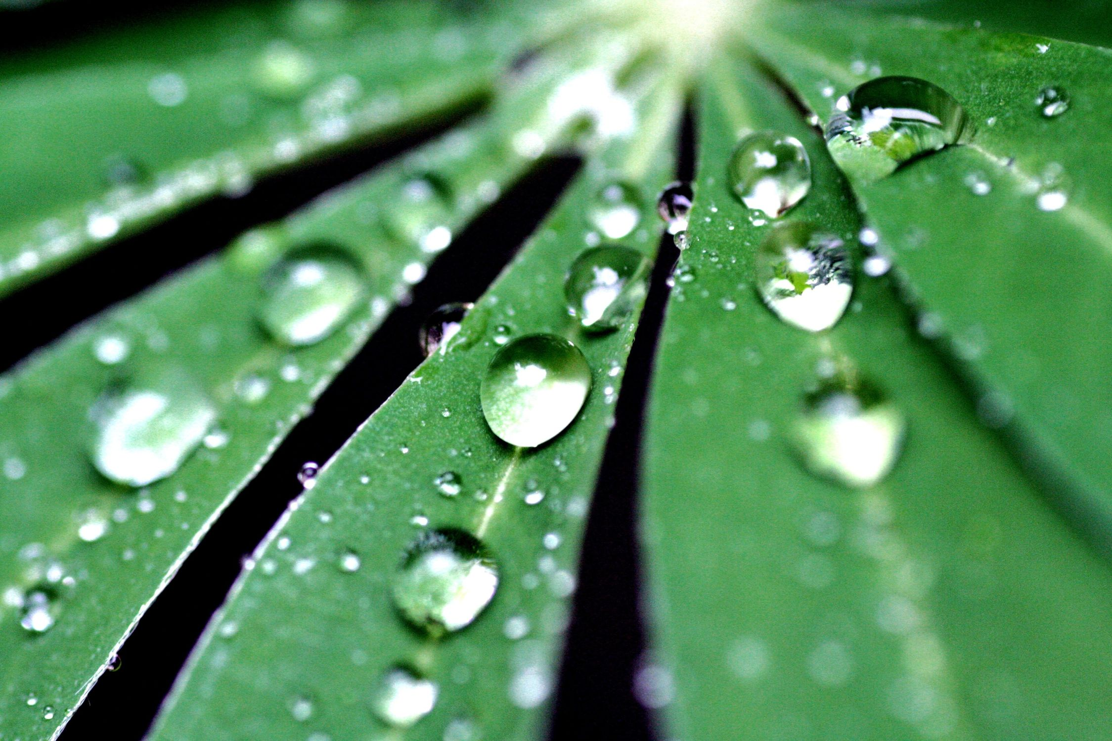 Bild mit Natur, Wasser, Grün, Pflanzen, Wassertropfen, Regentropfen, Rain drops