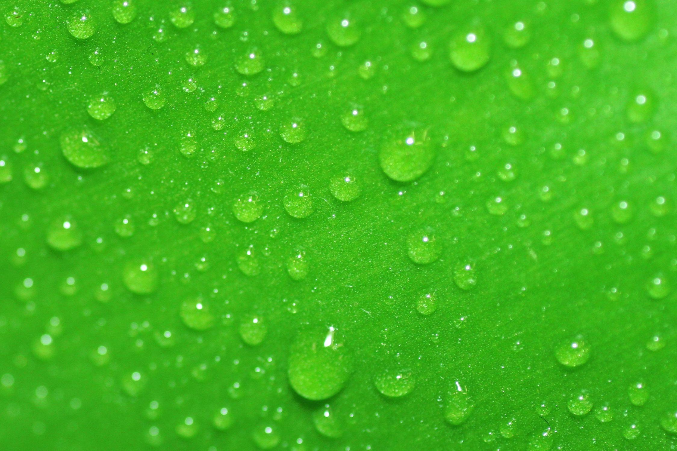 Bild mit Farben, Natur, Elemente, Wasser, Grün, Pflanzen, Gräser