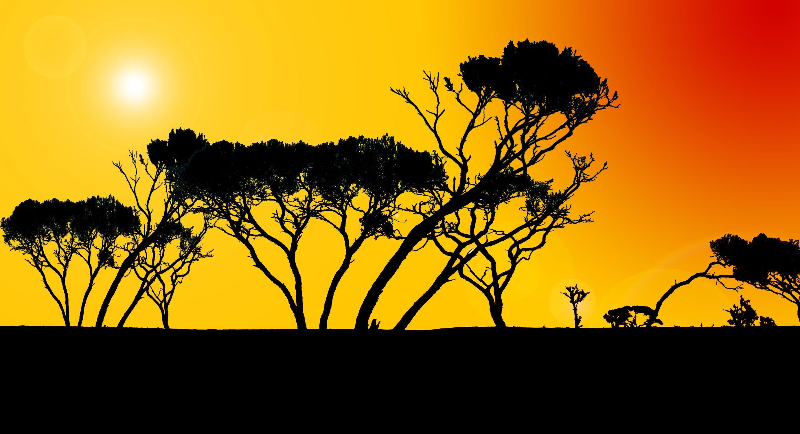 Bild mit Afrika, Illustrationen, Illustration Baum, Baummotiv, african Style