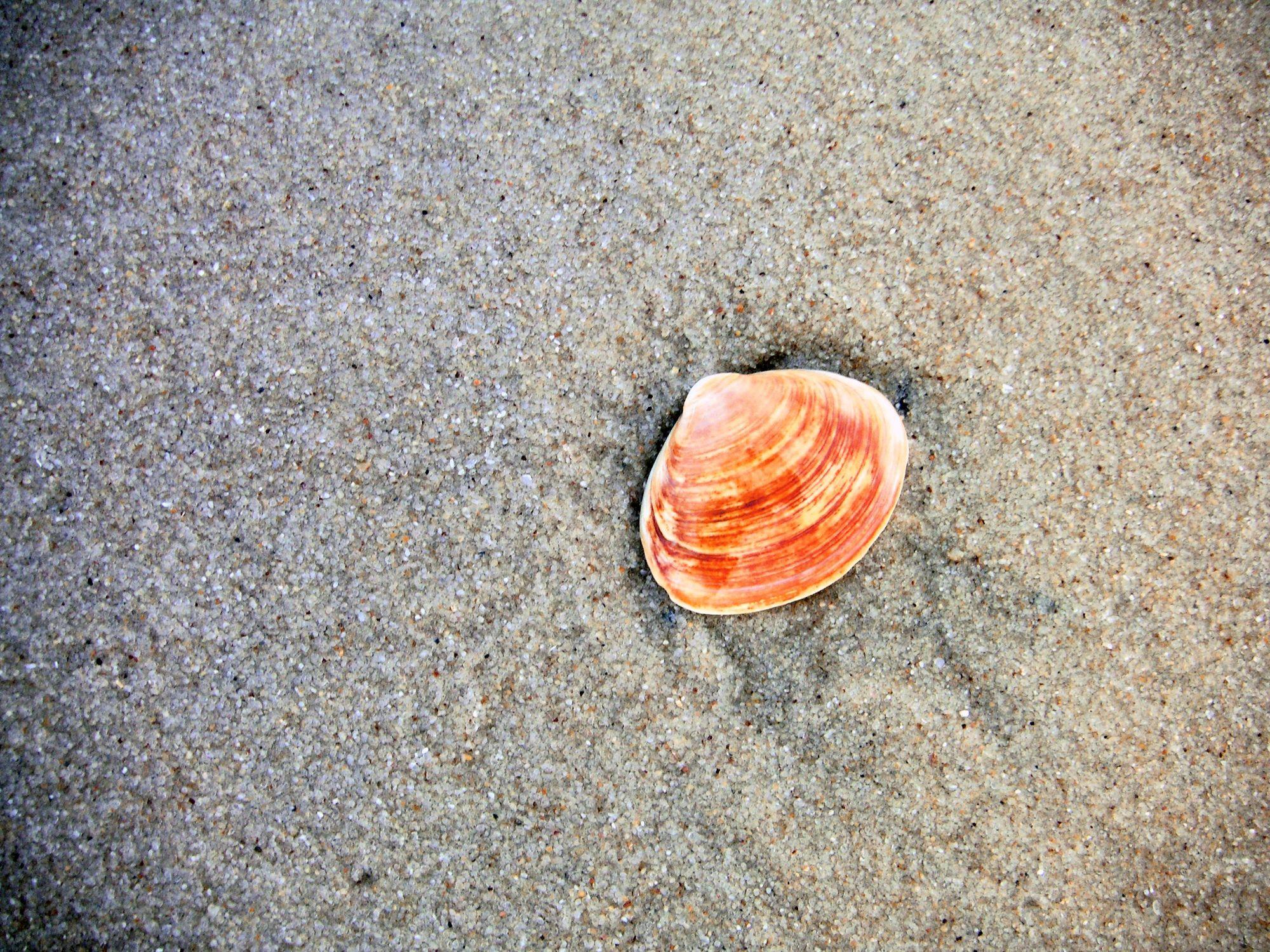 Bild mit Gegenstände, Materialien, Stein, Sand, Muscheln, Sandmuscheln