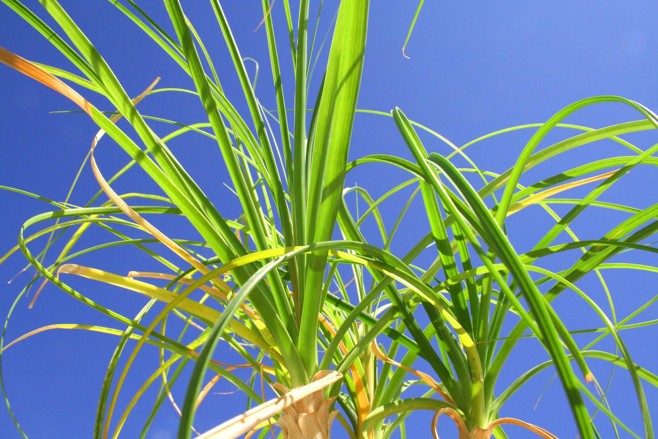 Bild mit Natur, Pflanzen, Gräser, Blumen, Schilf, Blume, Pflanze, Gras