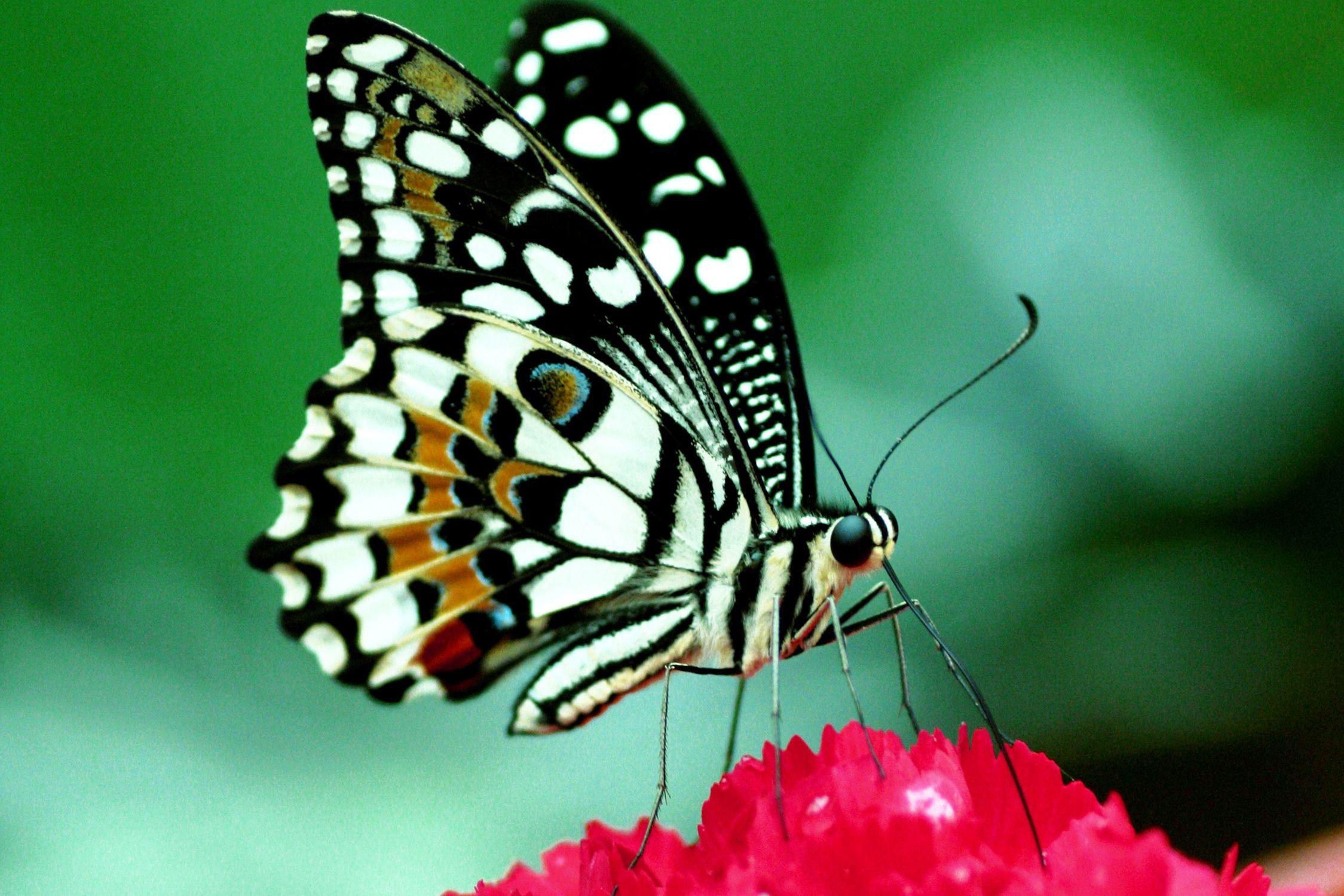 Bild mit Tiere, Natur, Pflanzen, Insekten, Schmetterlinge, Monarchfalter, Pflanze, butterfly