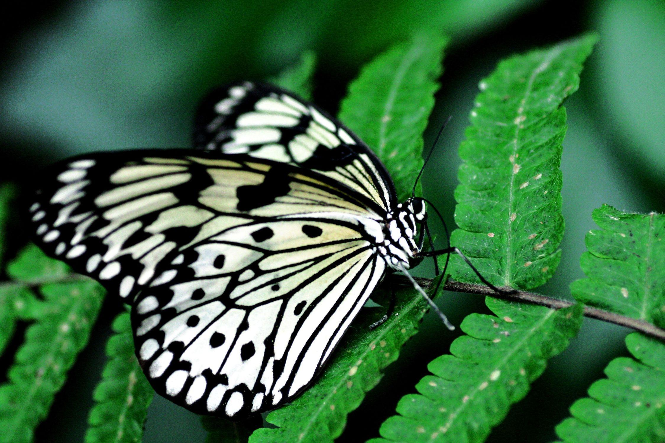 Bild mit Farben, Tiere, Natur, Grün, Pflanzen, Insekten, Schmetterlinge, Schmetterling