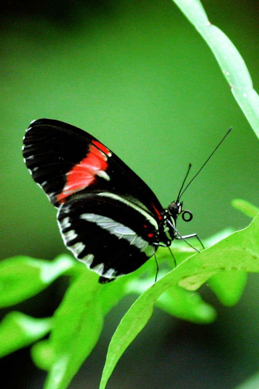 Bild mit Farben, Tiere, Natur, Grün, Pflanzen, Insekten, Schmetterlinge