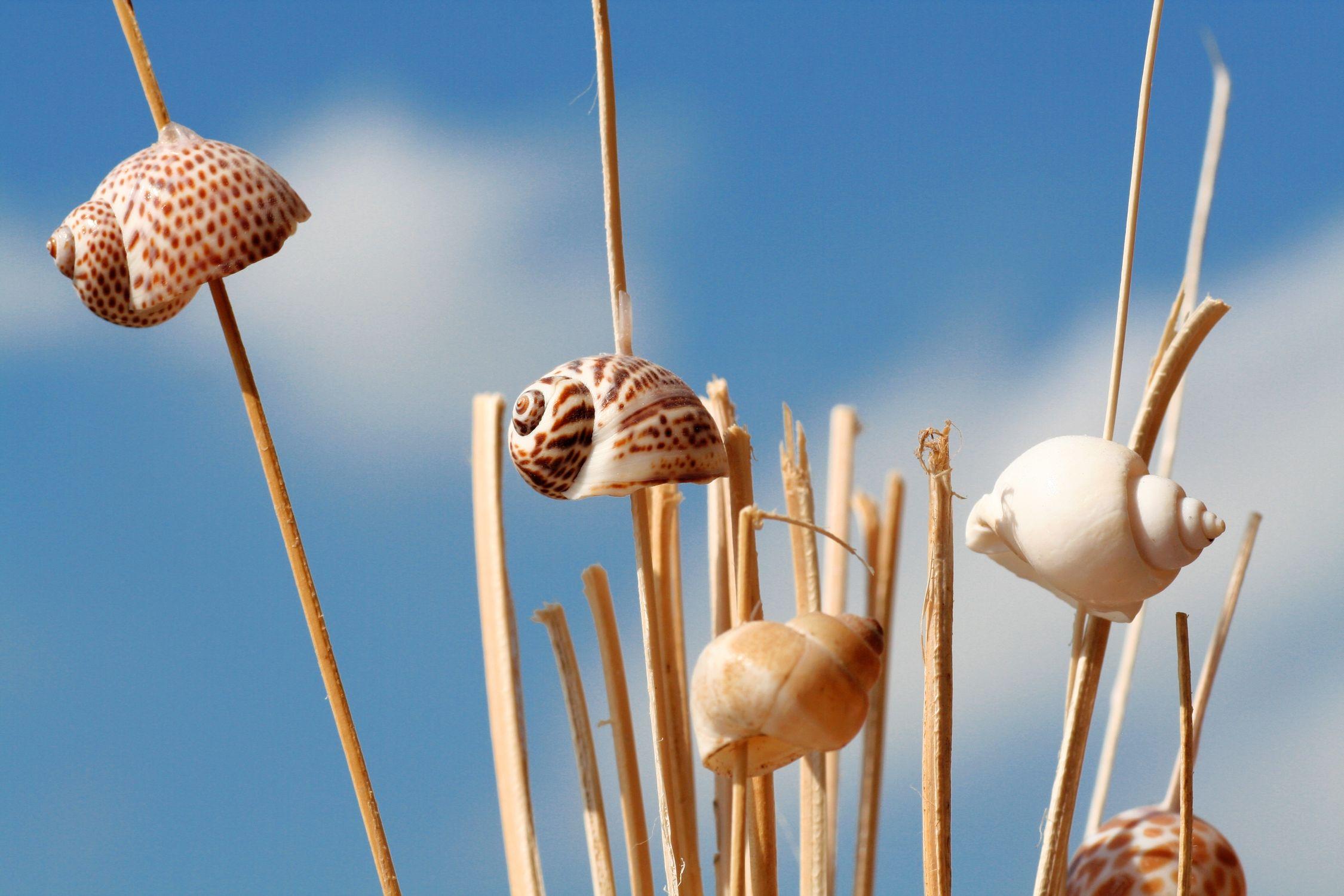 Bild mit Gräser, Schnecken, Muschel, Muscheln, schneckenhaus, Schneckenhäuser, Schalentiere