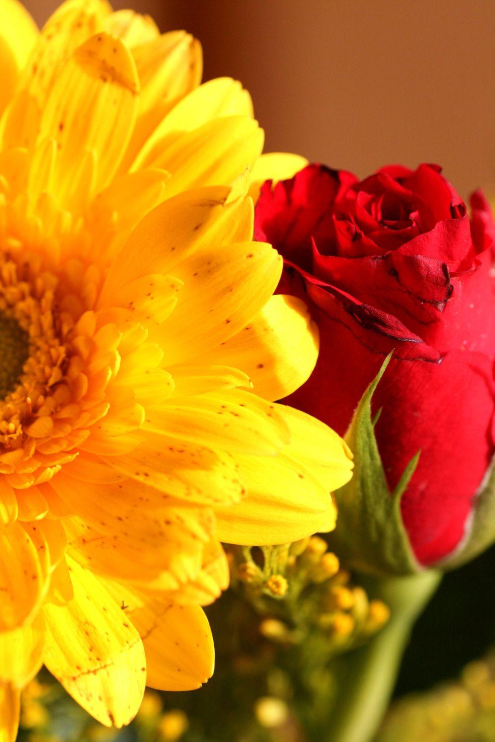 Bild mit Natur, Pflanzen, Blumen, Blume, Pflanze
