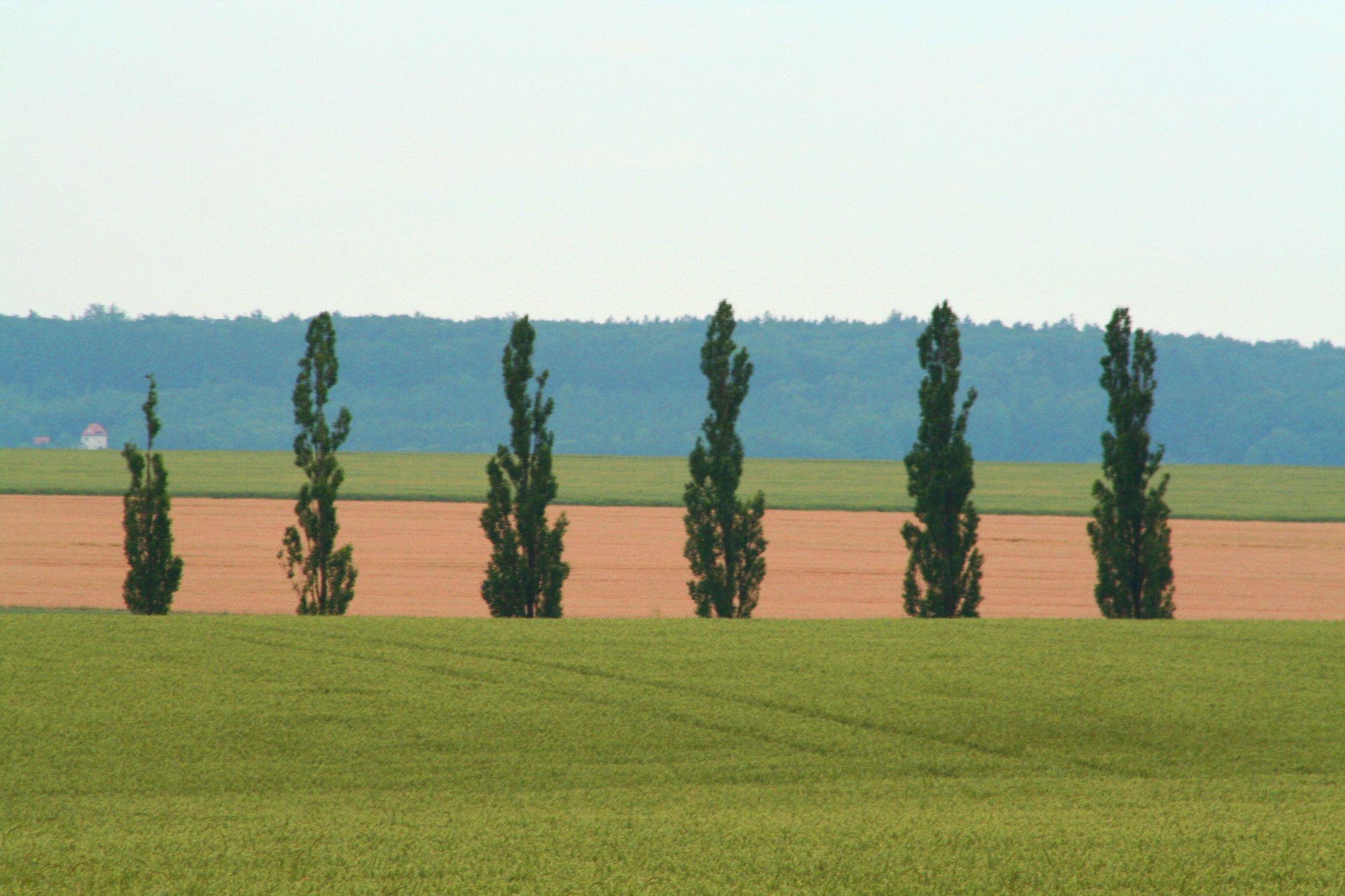 Bild mit Natur, Pflanzen, Gräser, Landschaften, Himmel, Bäume, Weiden und Wiesen, Nadelbäume