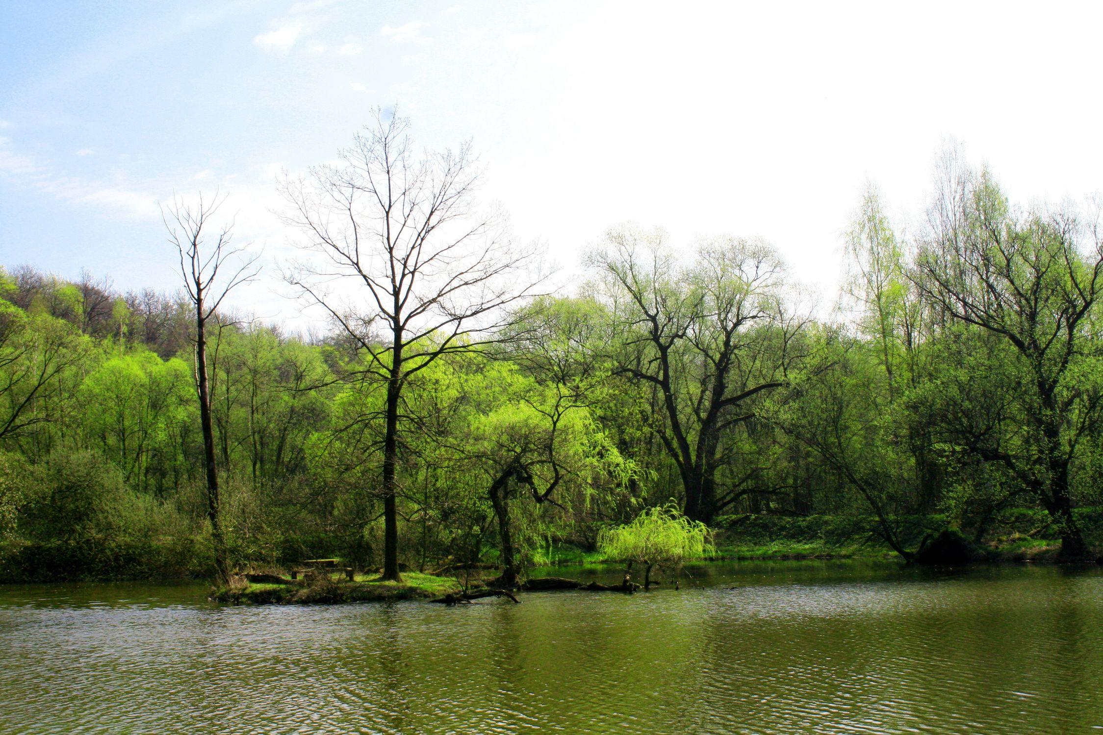 Bild mit Natur, Wasser, Grün, Pflanzen, Landschaften, Bäume, Gewässer, Küsten und Ufer, Wälder, Seen, Flüsse, Teiche